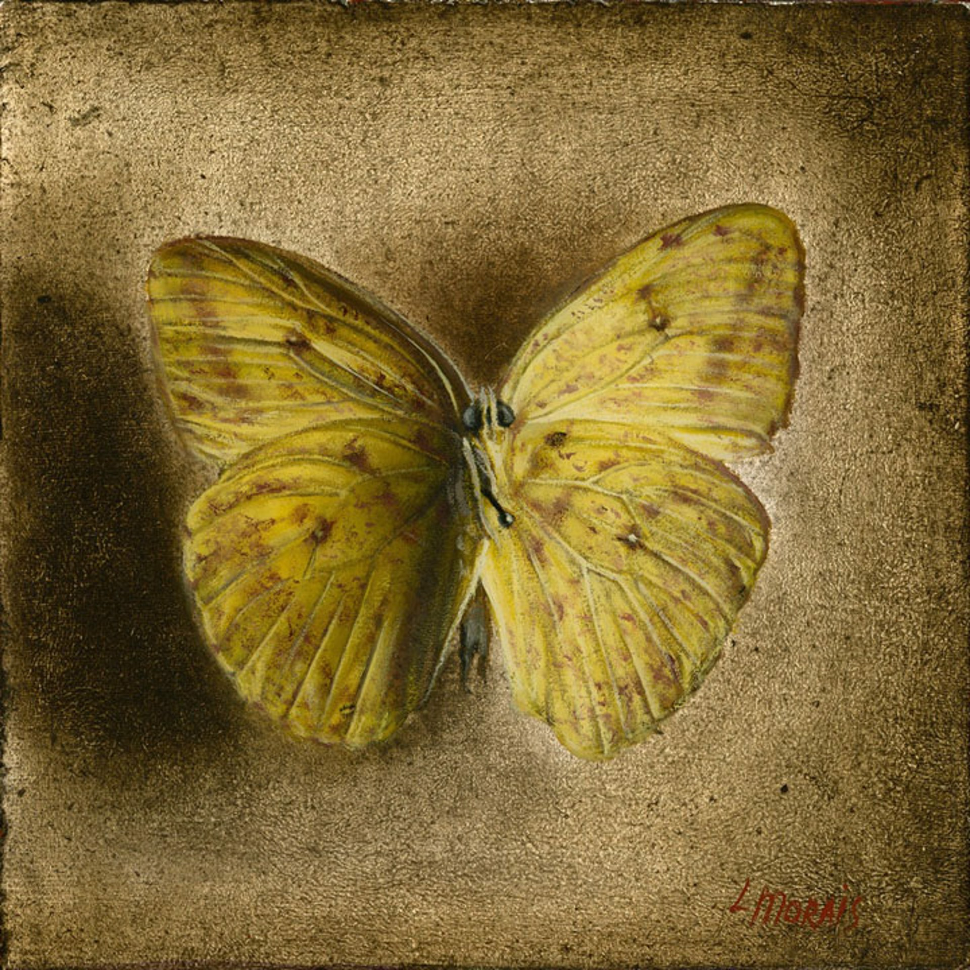 Yellow Butterfly (Shadowbox) by Larissa Morais