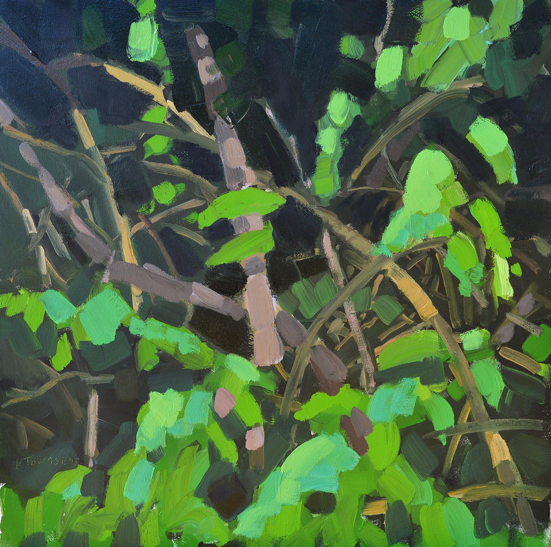 Underbrush by Krista Townsend