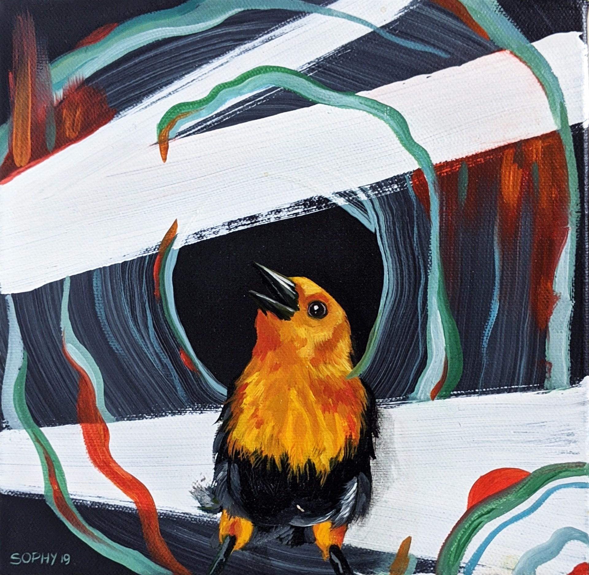 Little Bird by Sophy Tuttle
