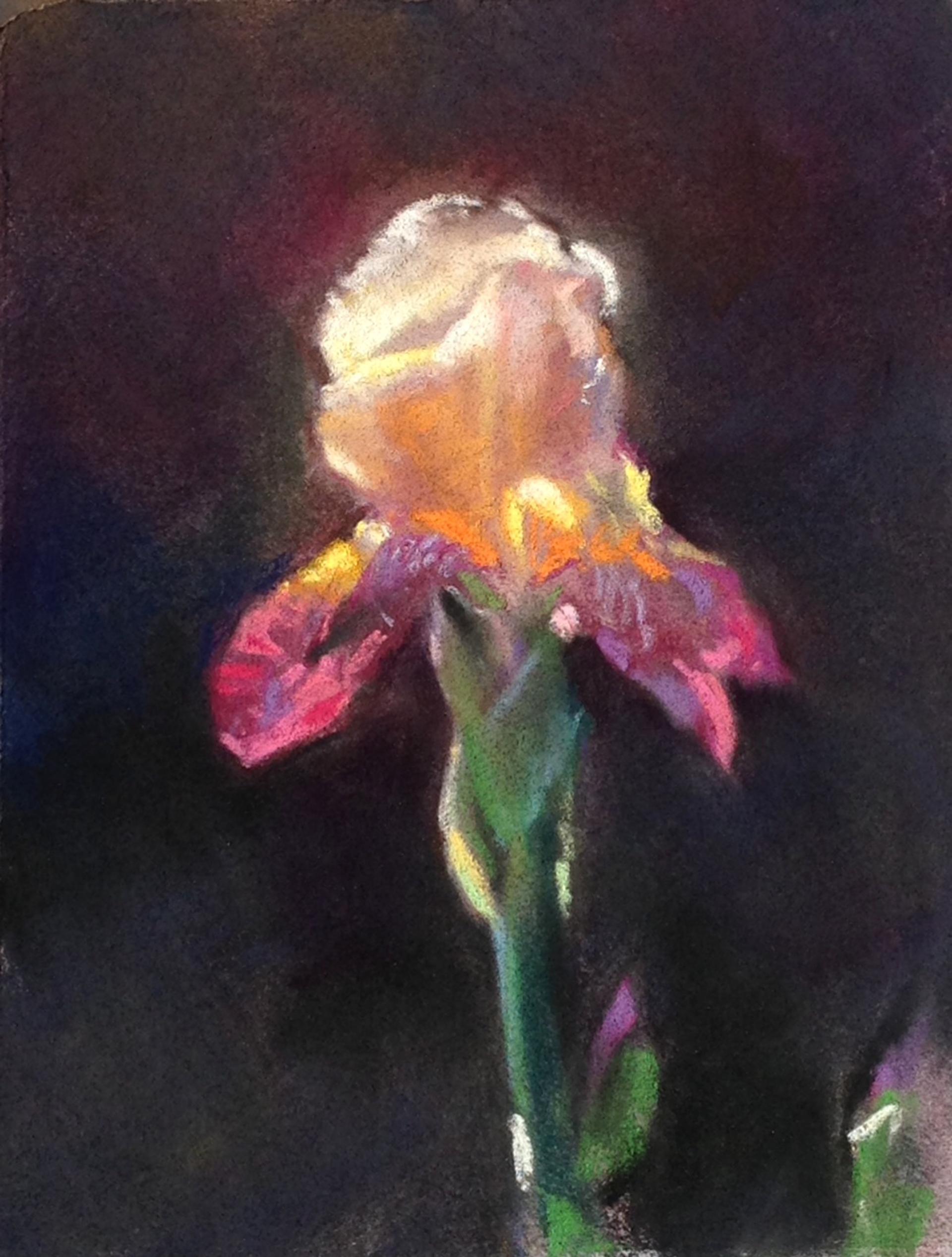 Flor de Iris by Bruce A Gómez