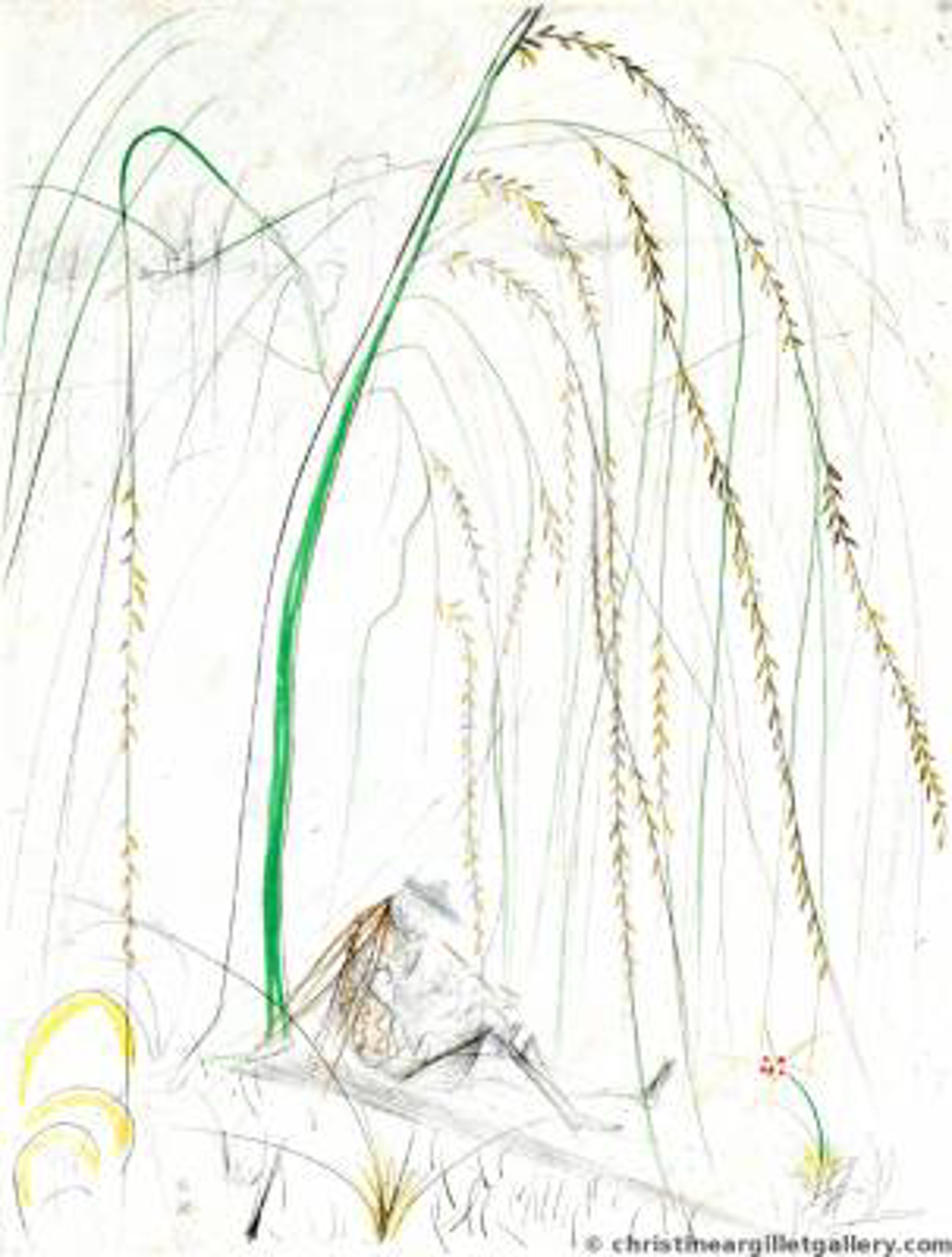 """Ronsard """"Weeping Willow"""" by Salvador Dali"""