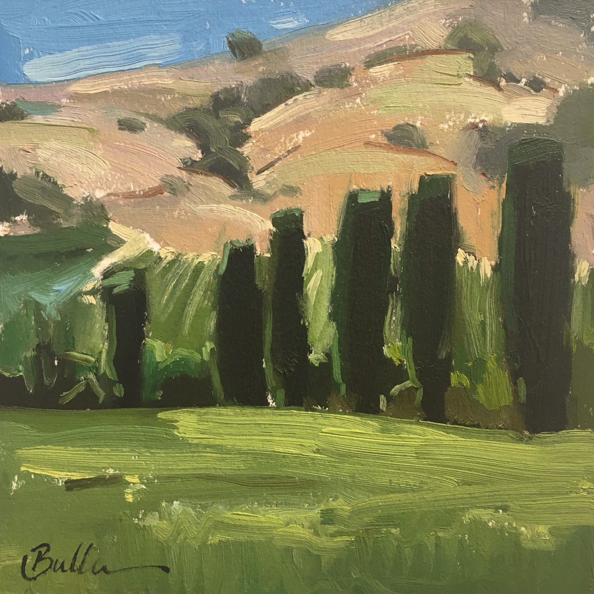 Cypress at the Winery by Samantha Buller