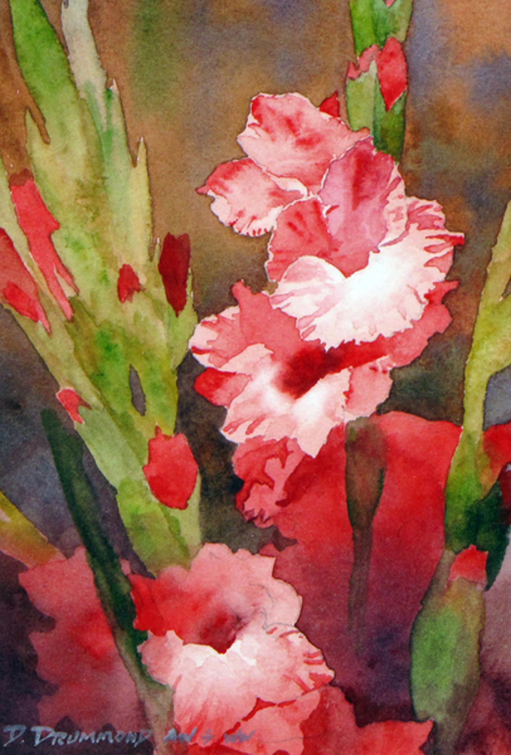 Red Gladiola by David Drummond