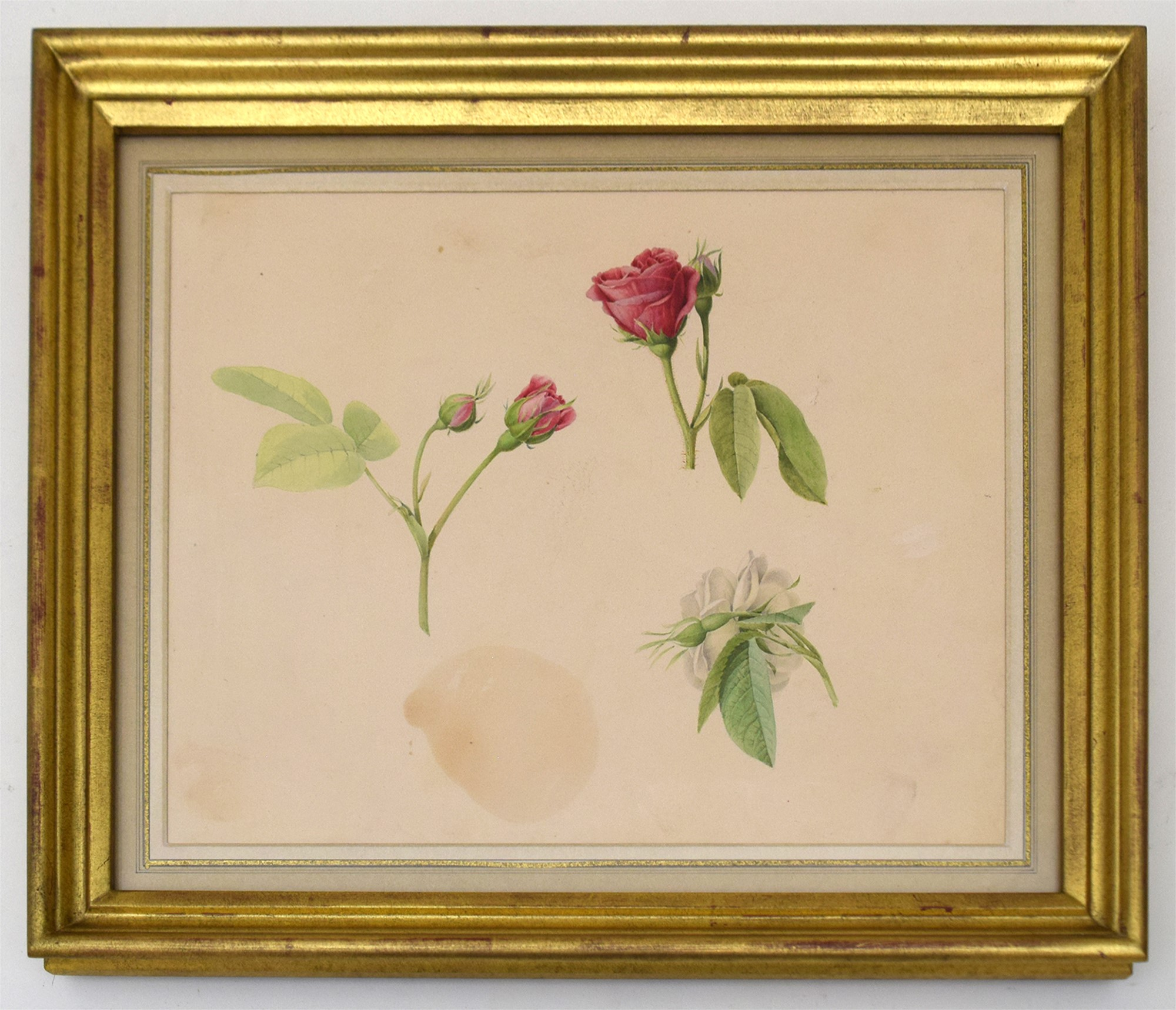 BOTANICAL STUDY by A. Fourcault