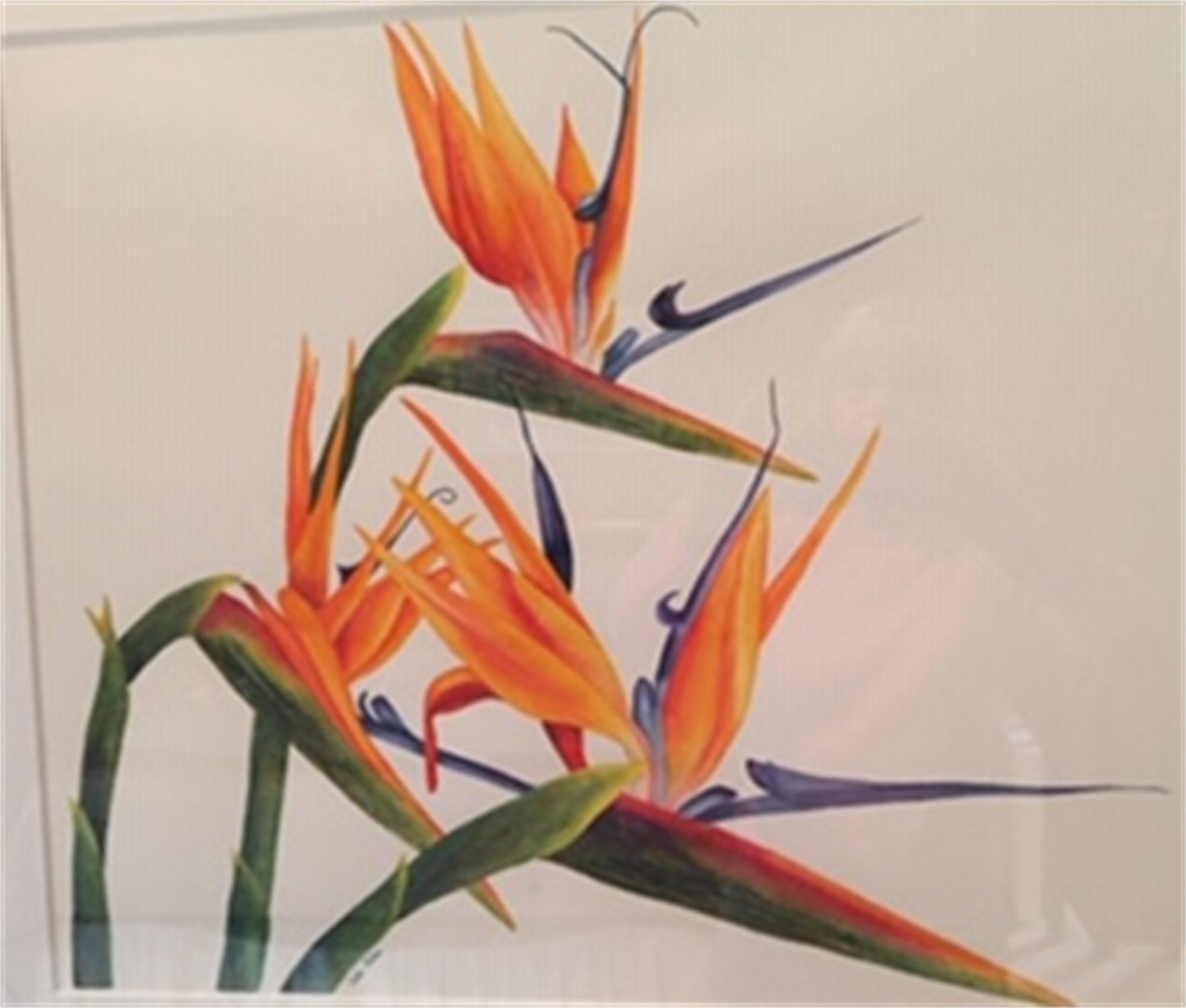 Birds of Paradise by Kate Nilan (Portland, OR)