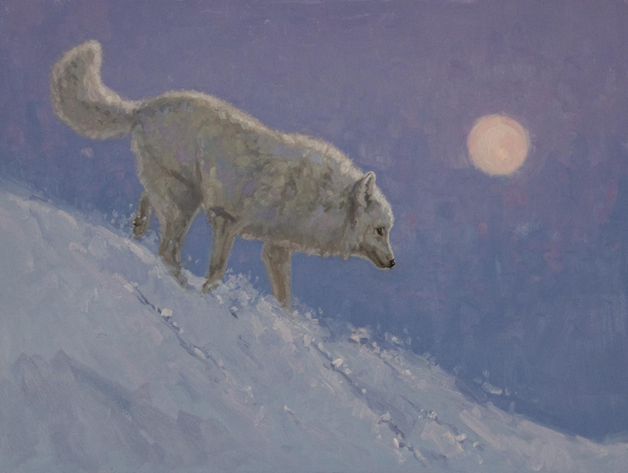 Arctic by Tiffany Stevenson