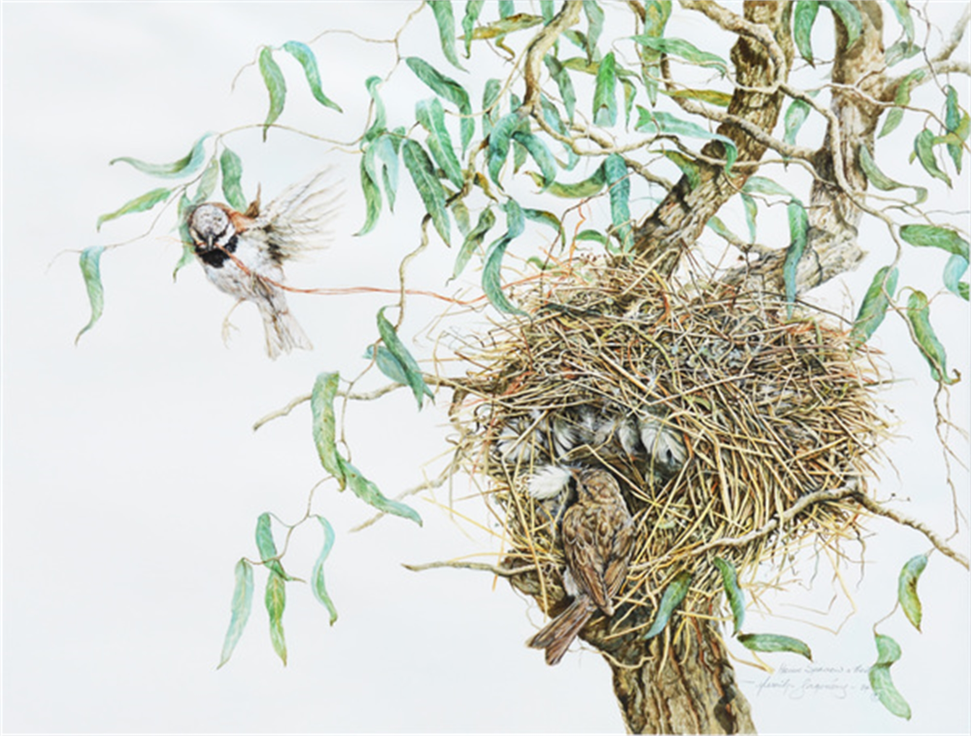 Sparrows and Nest by Merrilyn Jaquiery