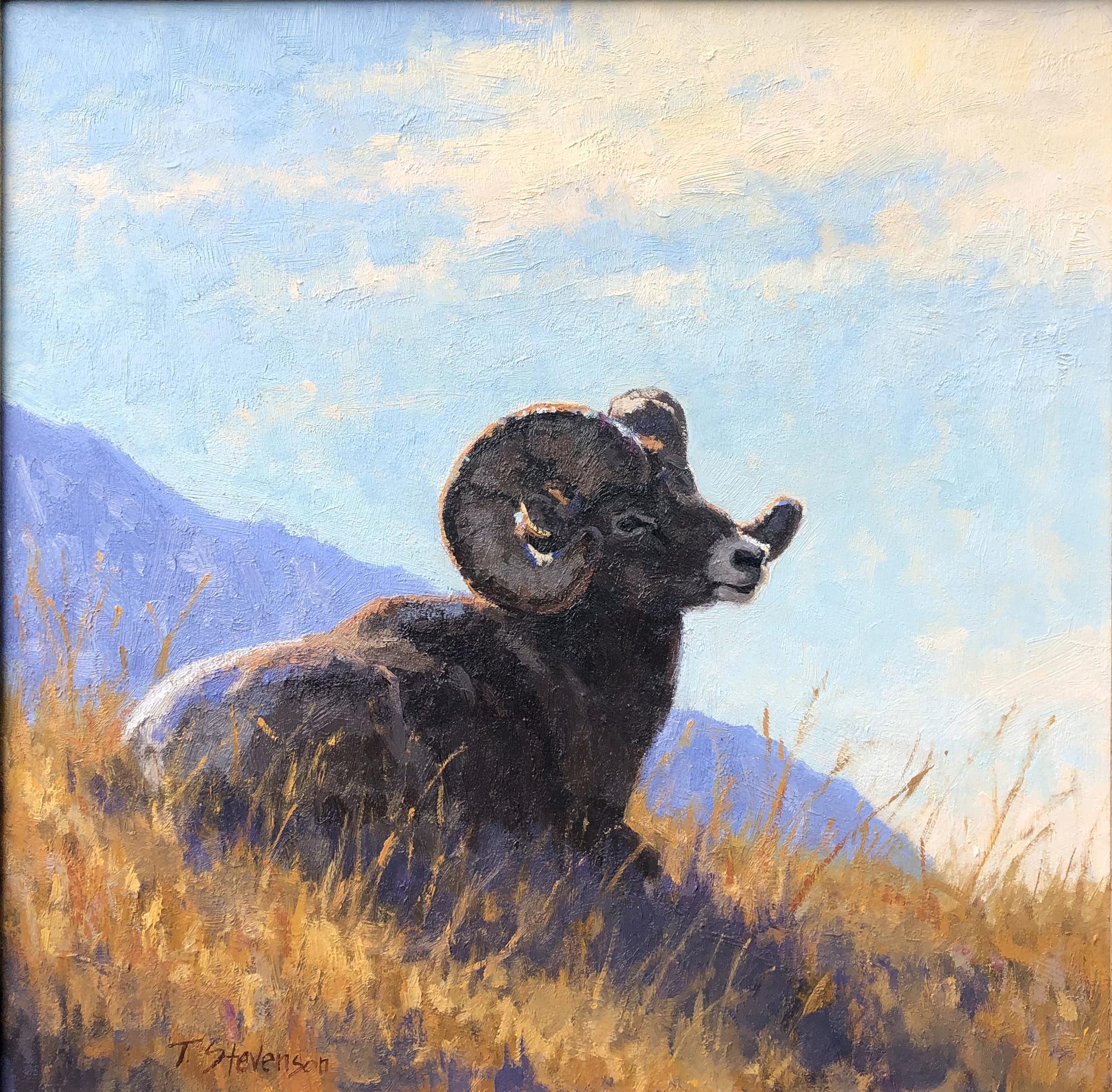 Rocky Mountain Ram by Tiffany Stevenson