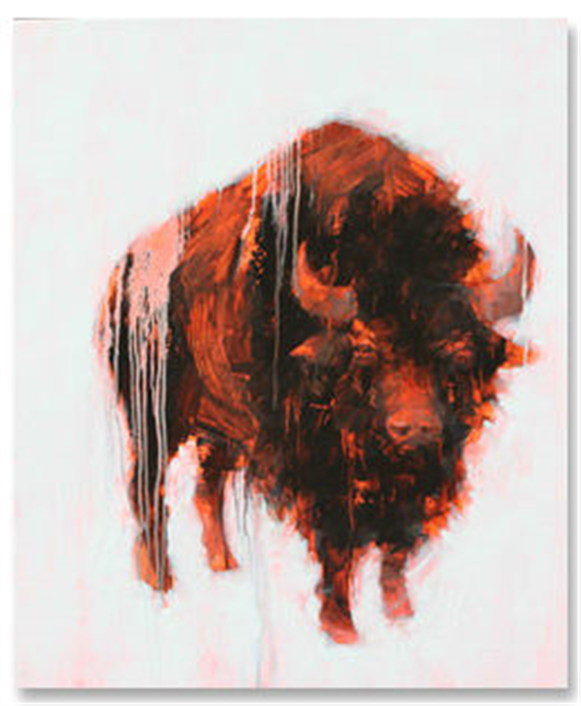 Bison 4 by Angie Renfro