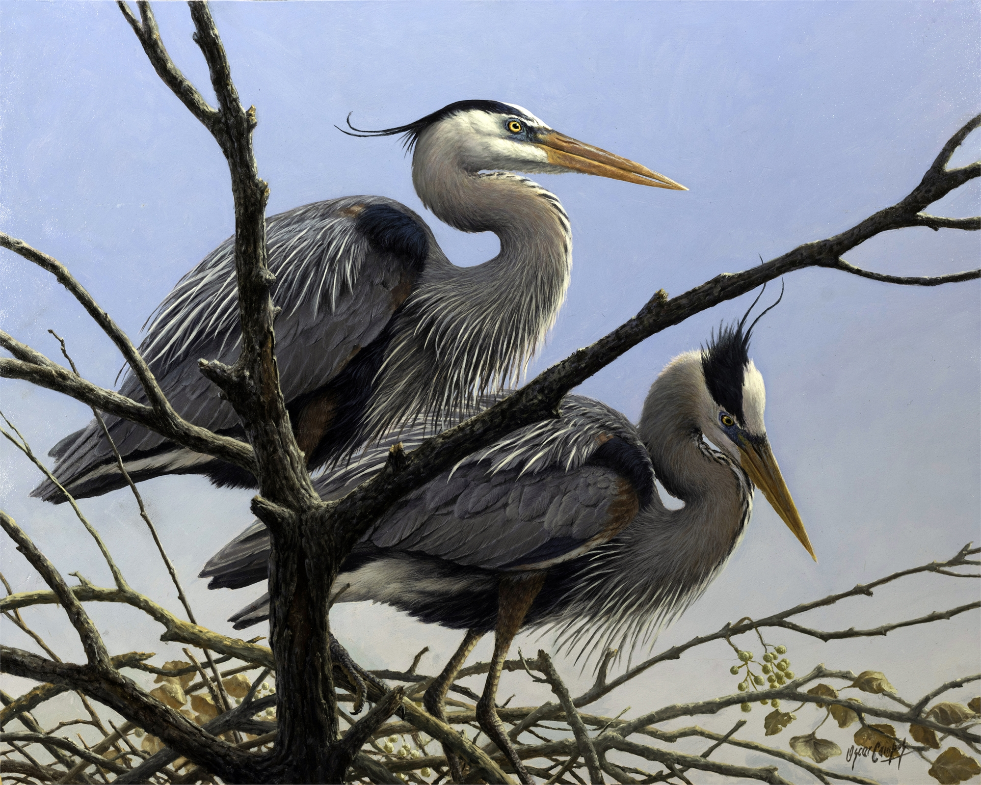 Garzas Azules en el Nidal Blue Heron Rookery by Oscar Campos