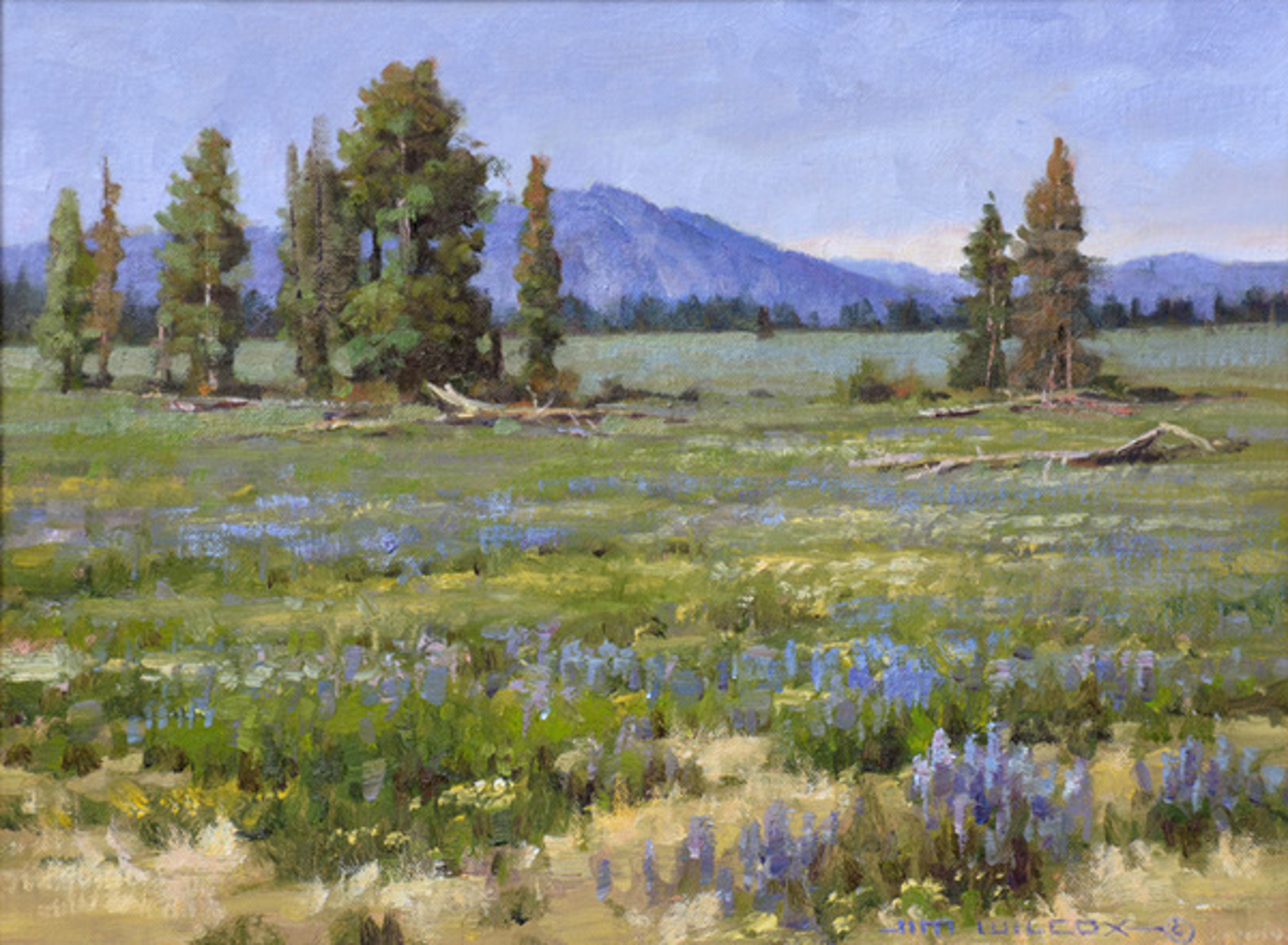 Lupine Meadow by Jim Wilcox