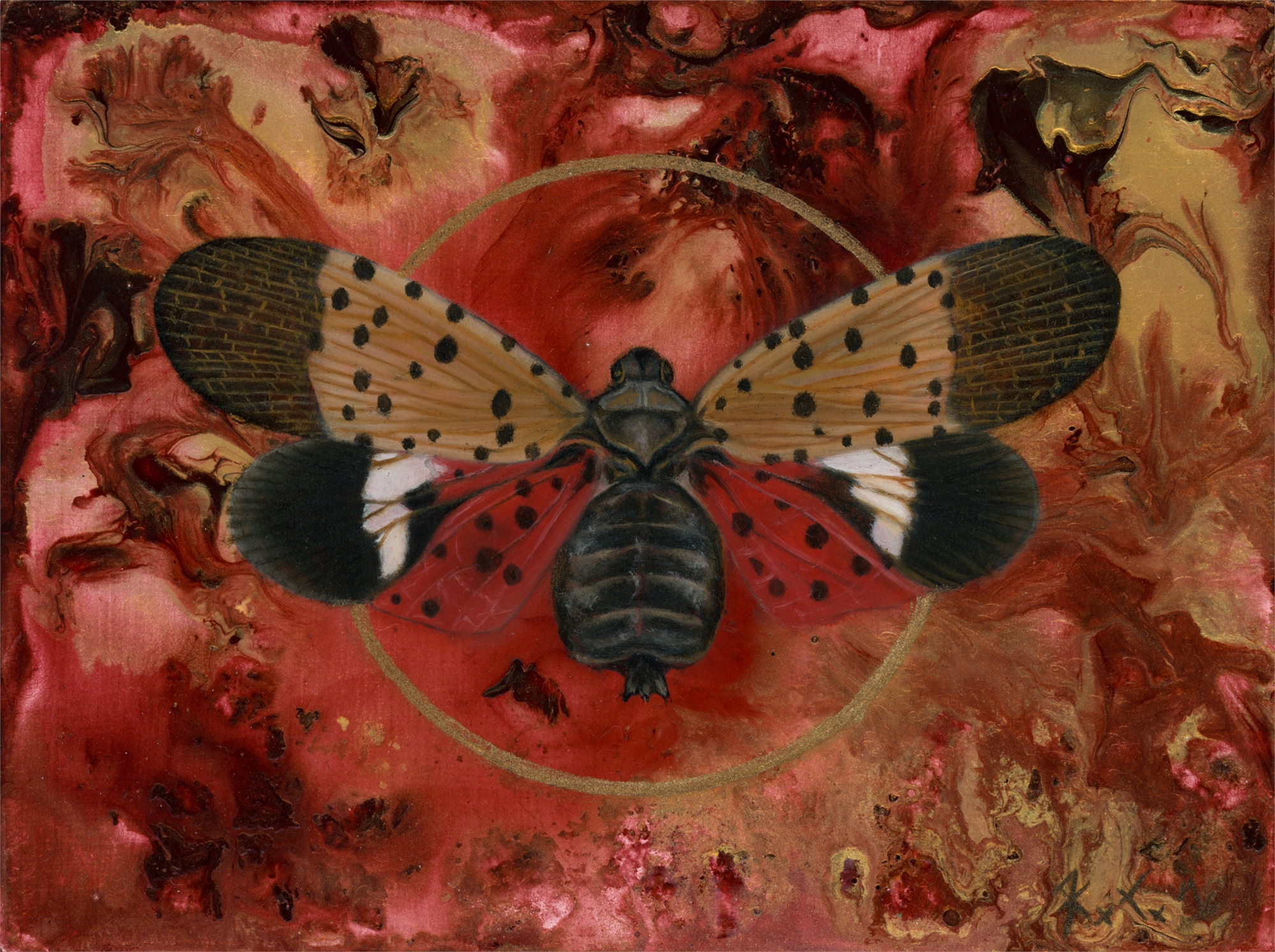 Lycorma delicatula by Kierstin Young