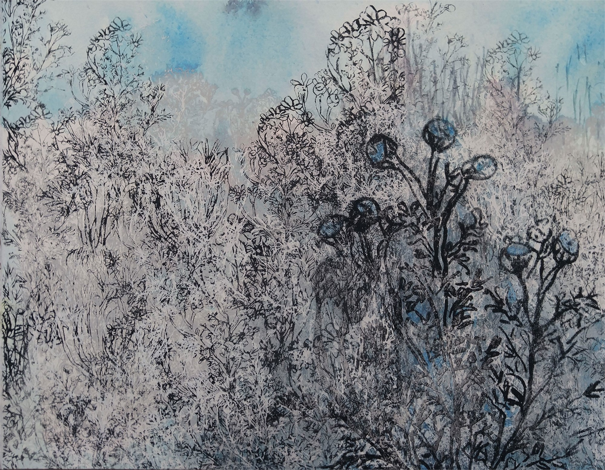 Blue Chamomile ii by Pantea Karimi