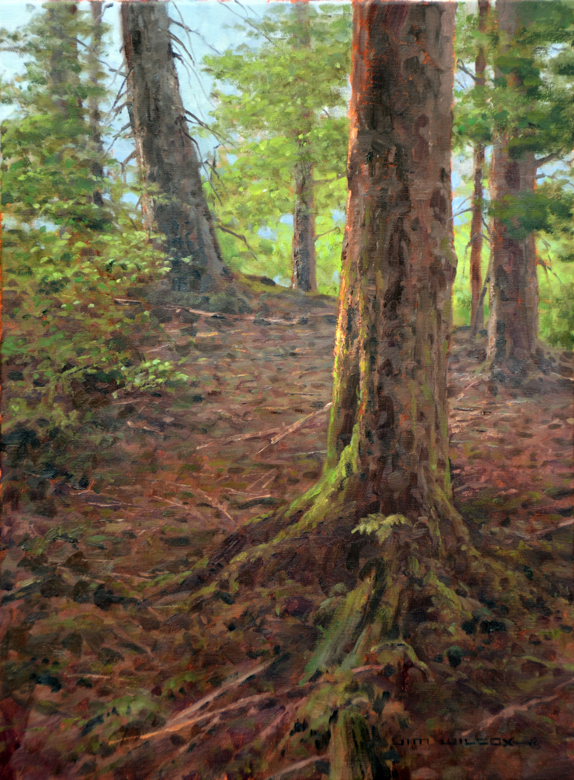 Ketchikan Forest by Jim Wilcox