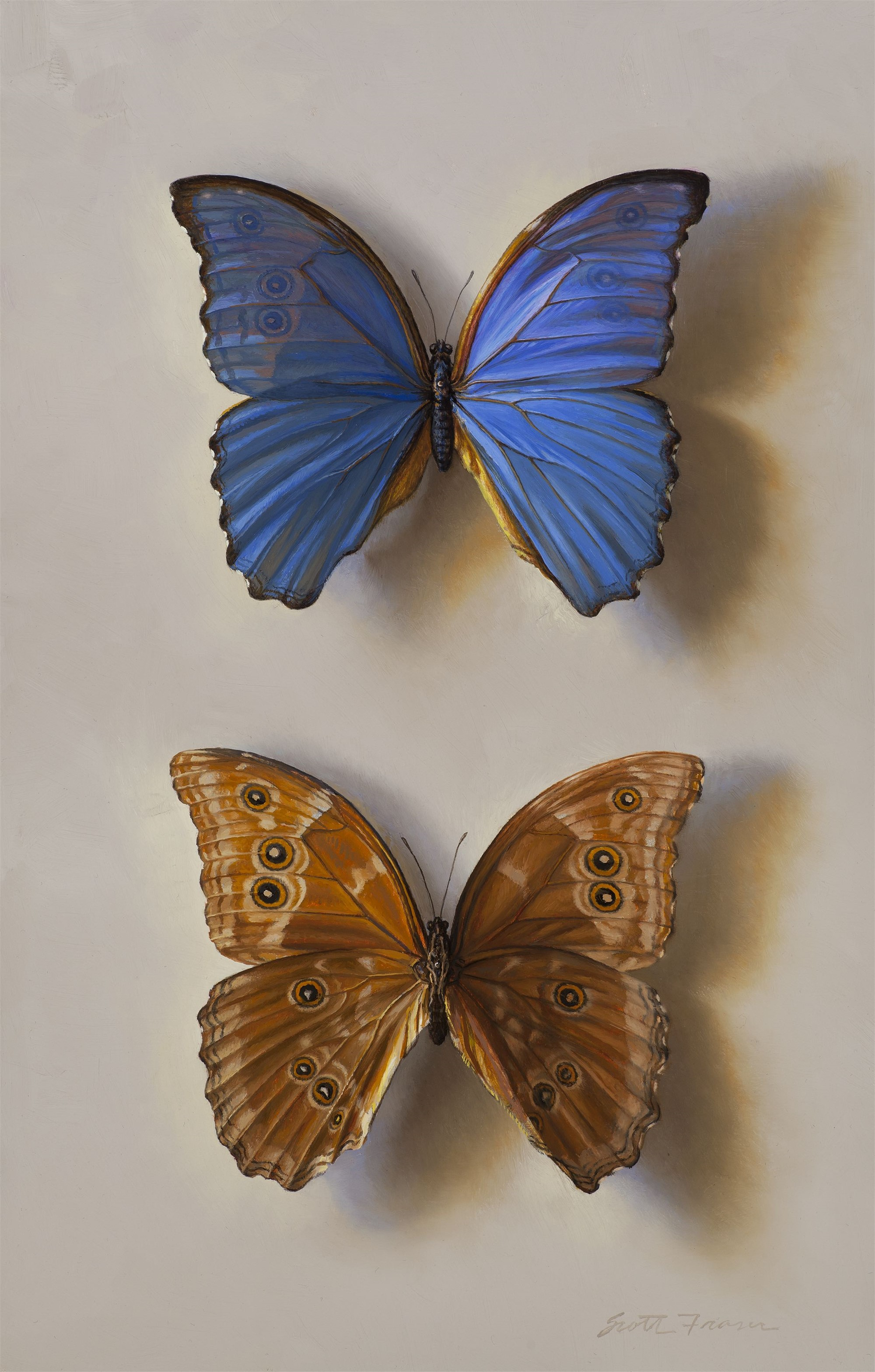 Blue Morpho - Front and Back by Scott Fraser