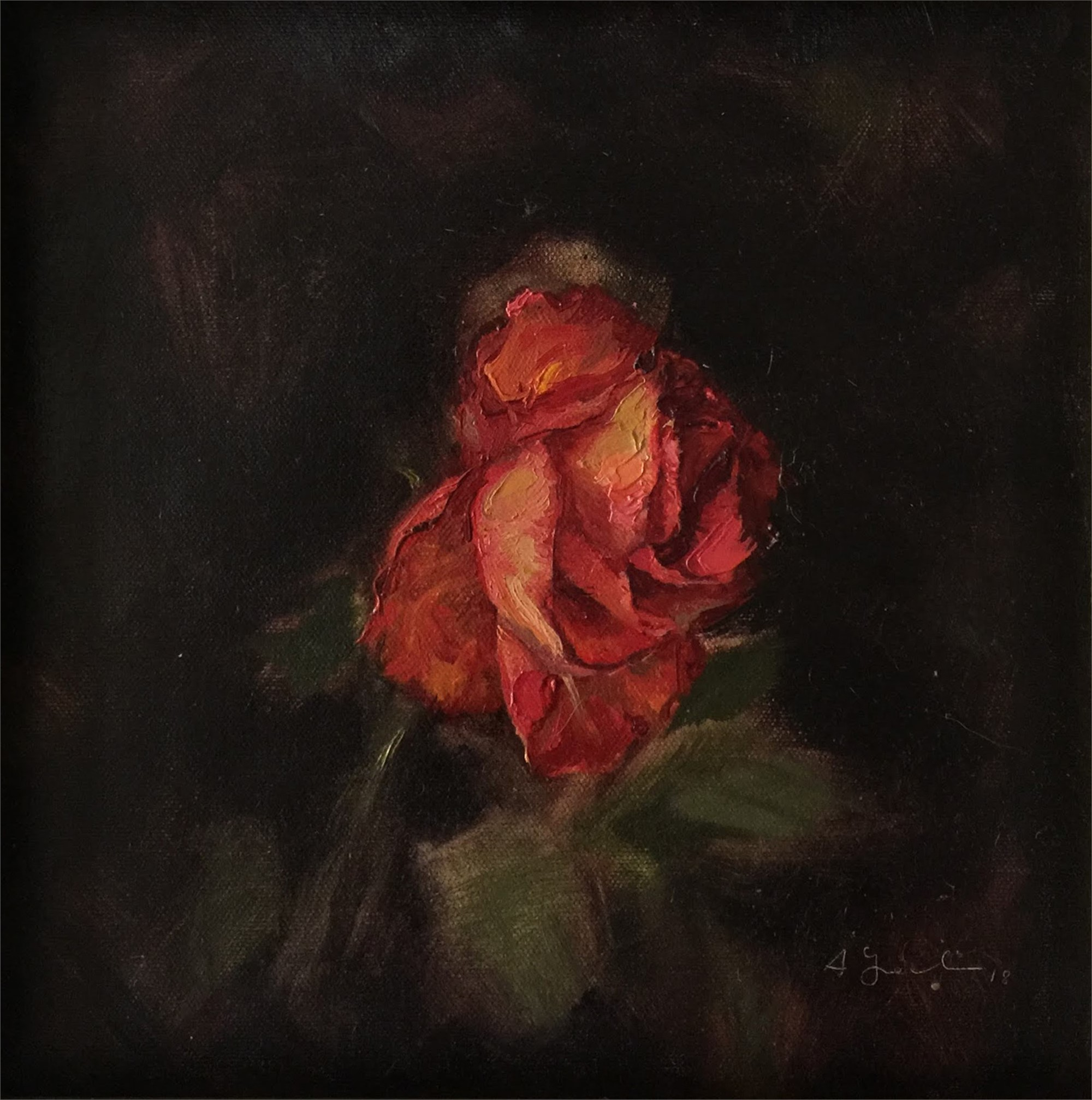 Portrait of a Rose 1 by Agnes Grochulska