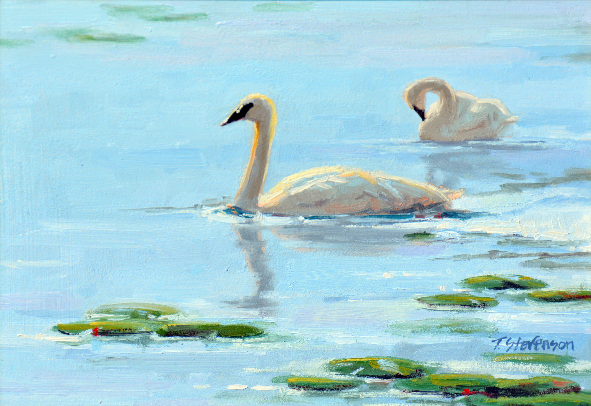 Swans and Lilies by Tiffany Stevenson