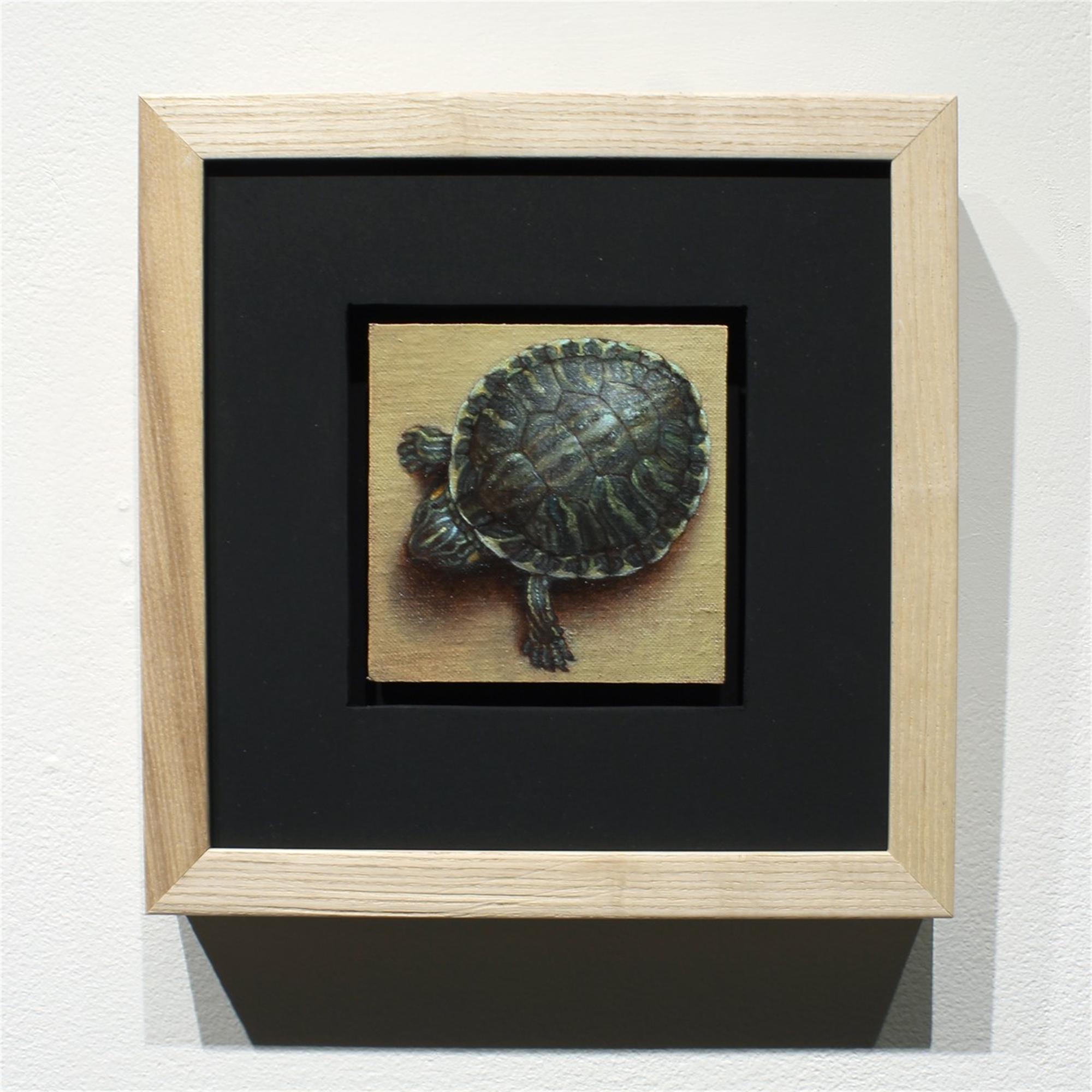 Turtle by Zane York