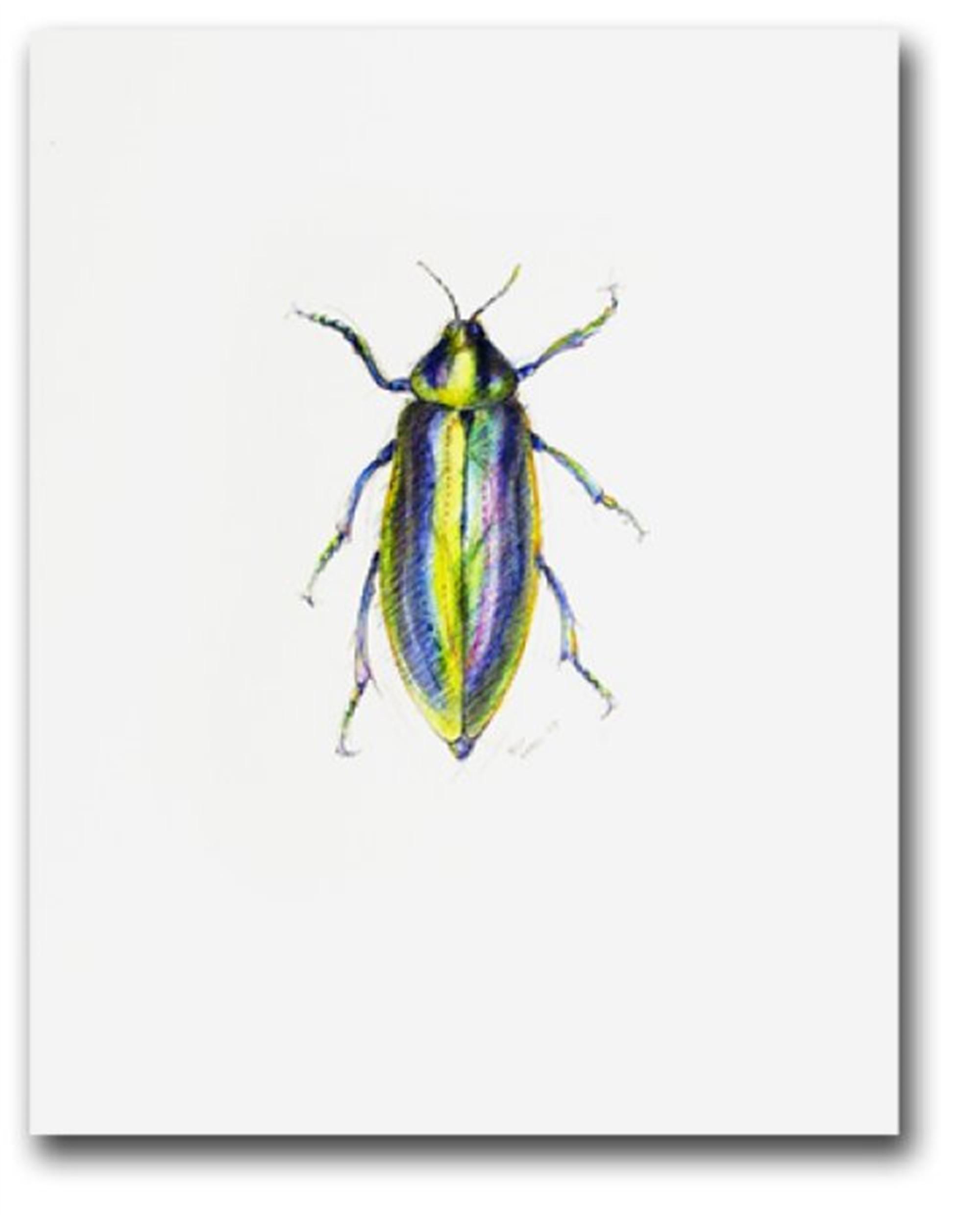 Euchroma Gigatea Beetle by Peter Hamel