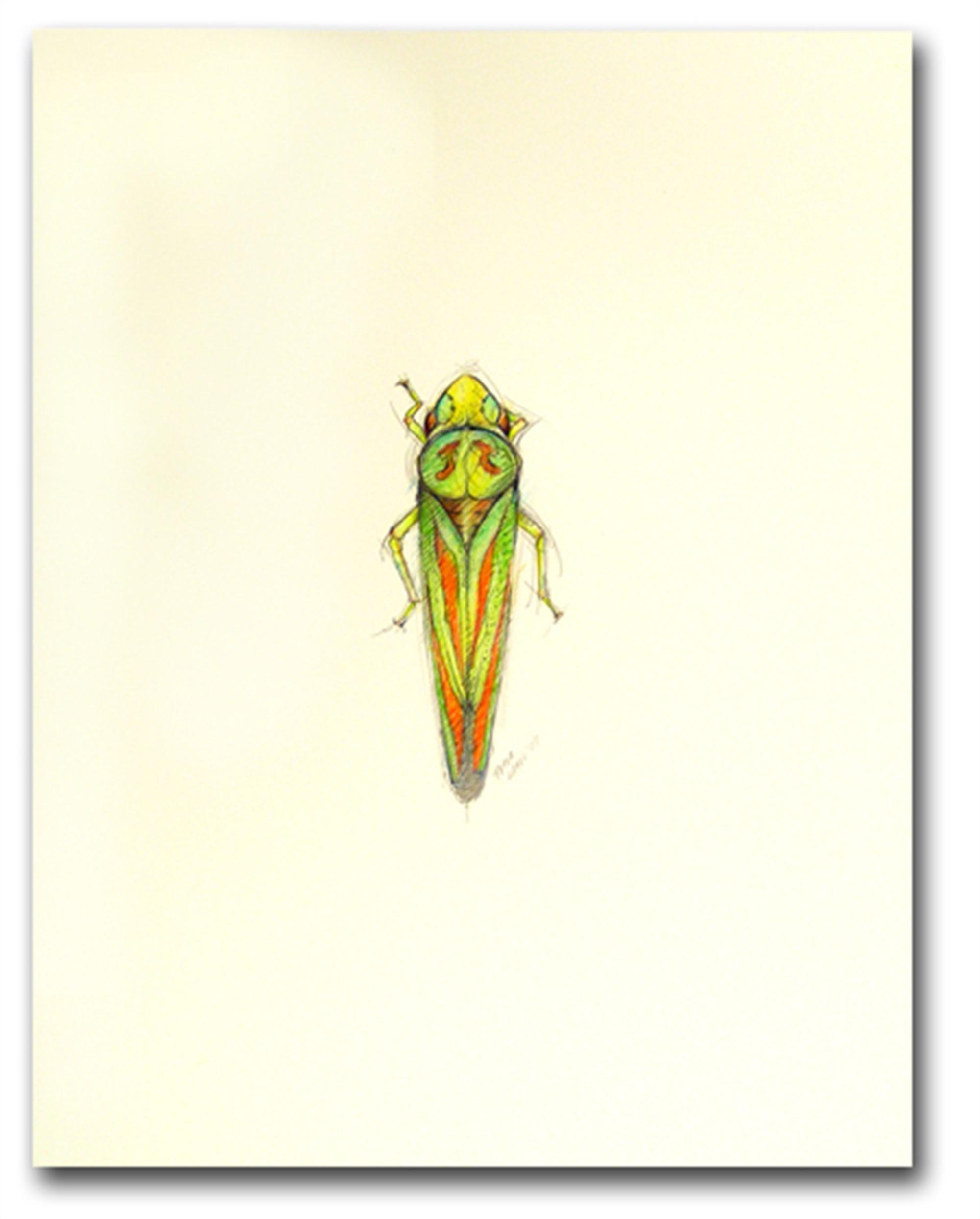 Scarlet & Green Leaf Hopper by Peter Hamel