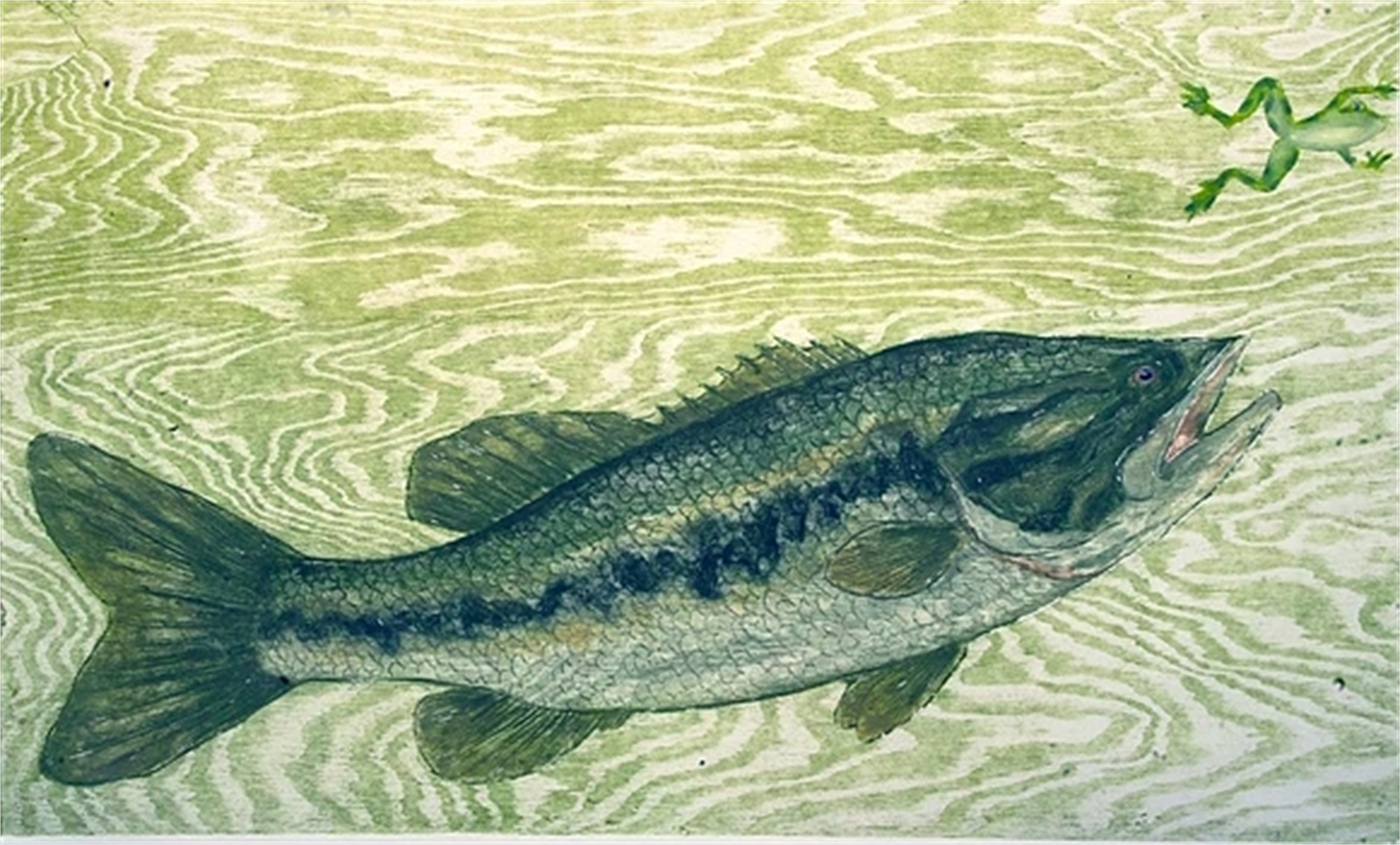 Largemouth Bass by David Hefner