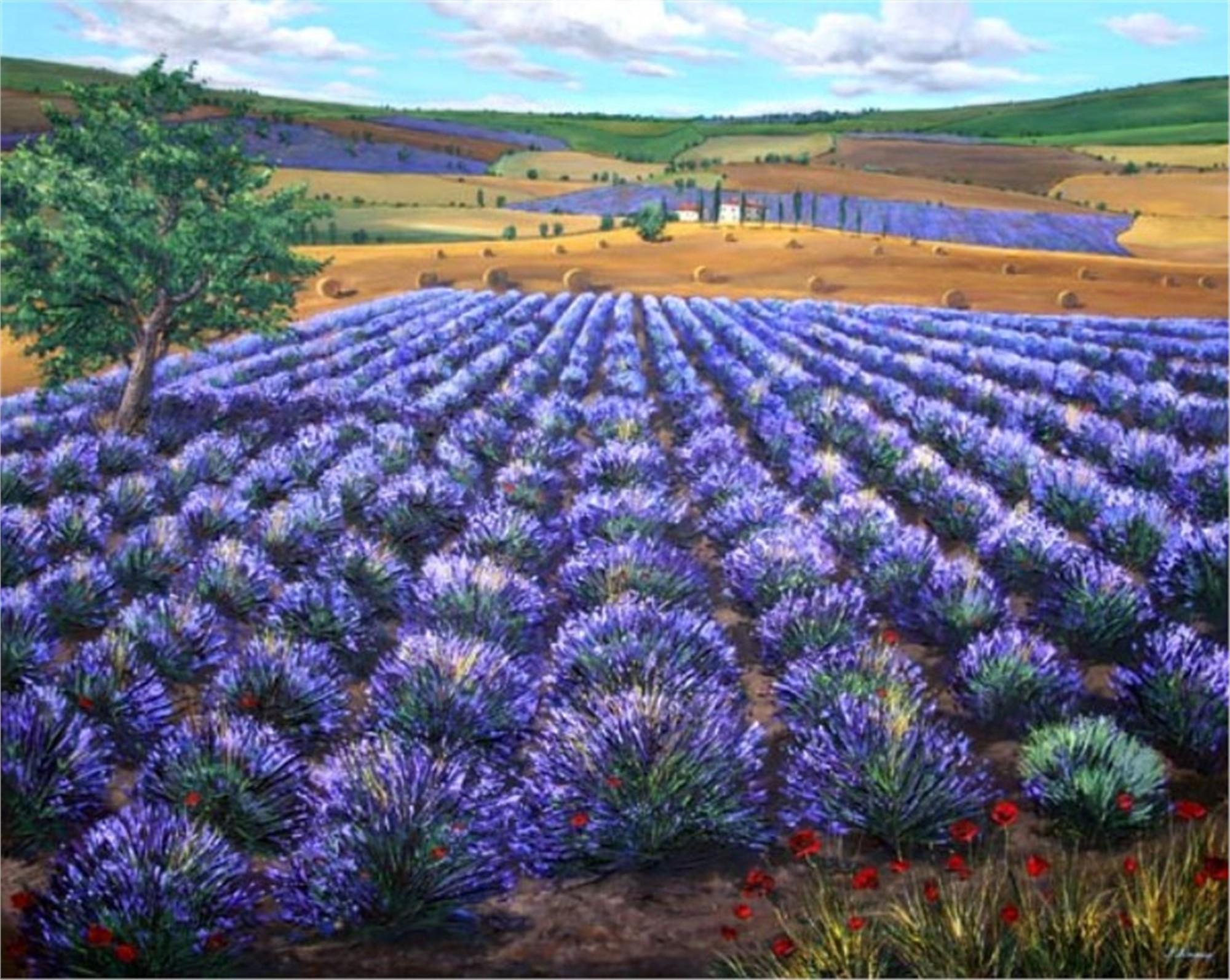 Dreaming of Lavender by Jennifer Vranes