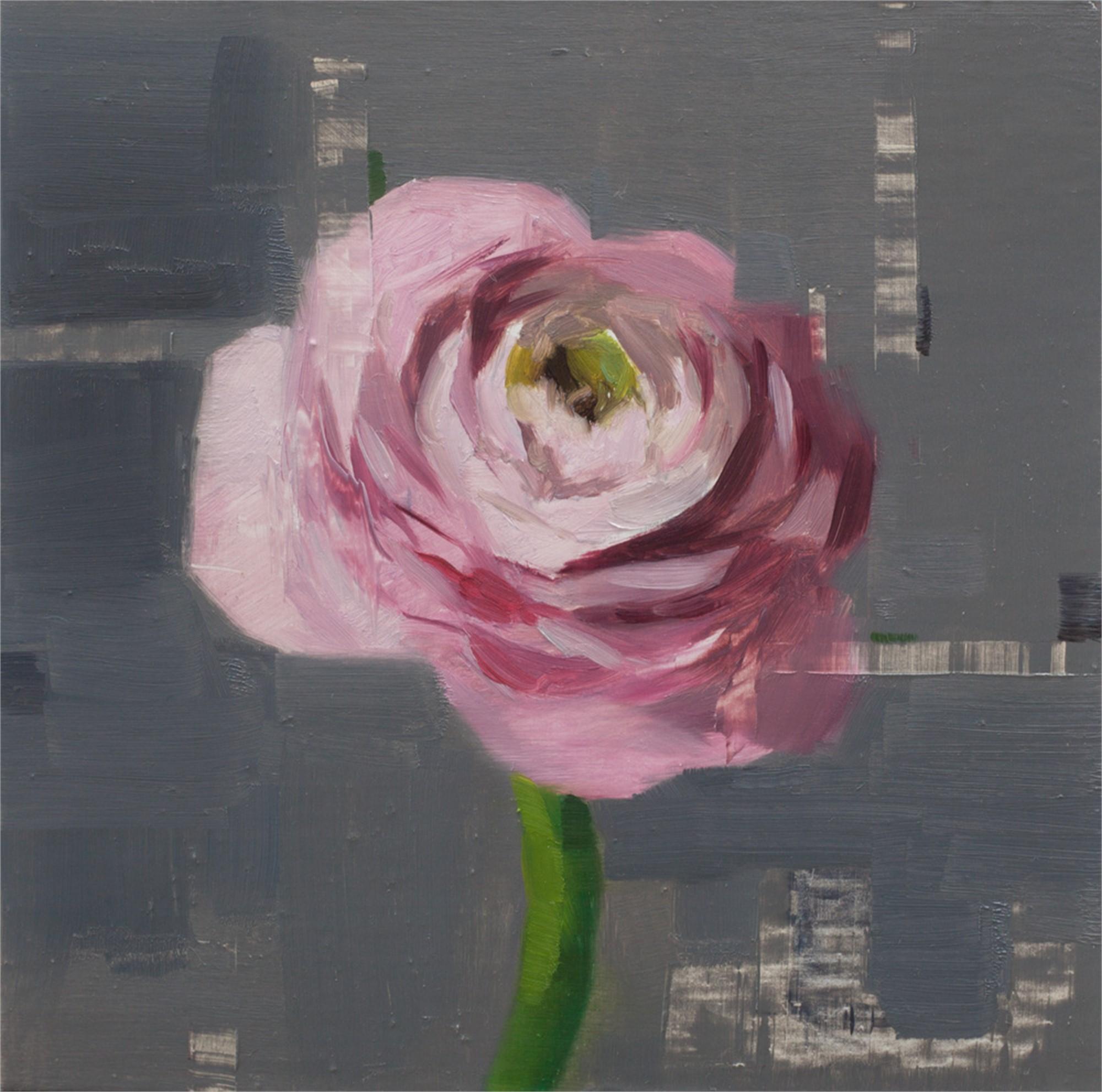 Pink Ranunculus Study by Jon Doran