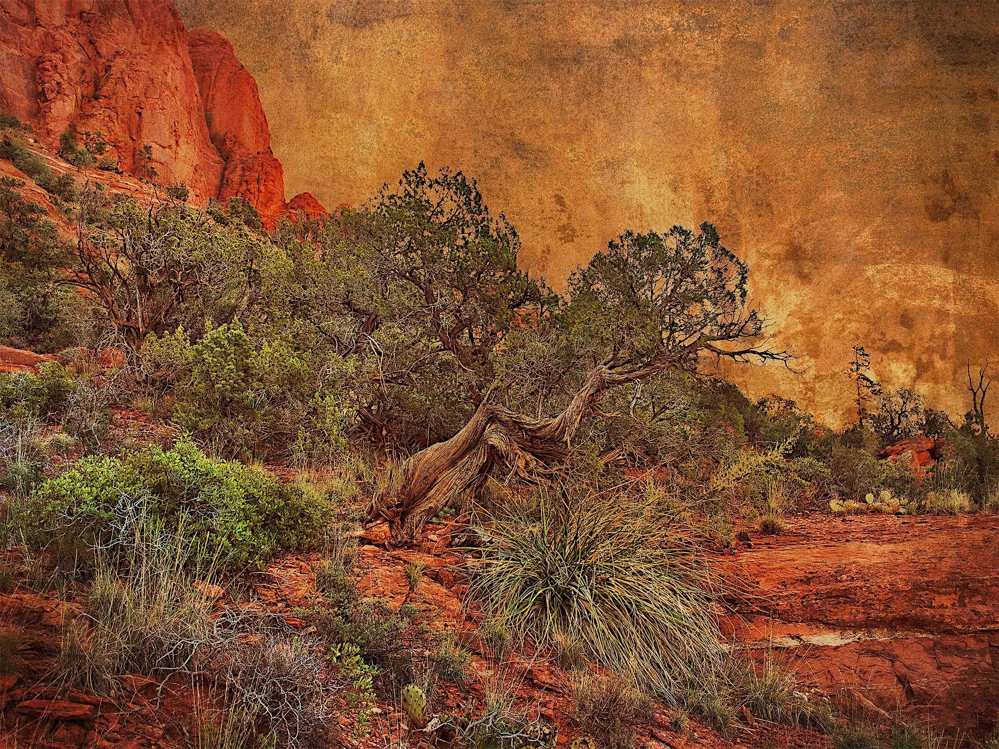 Juniper with Redrocks by Bob Coates