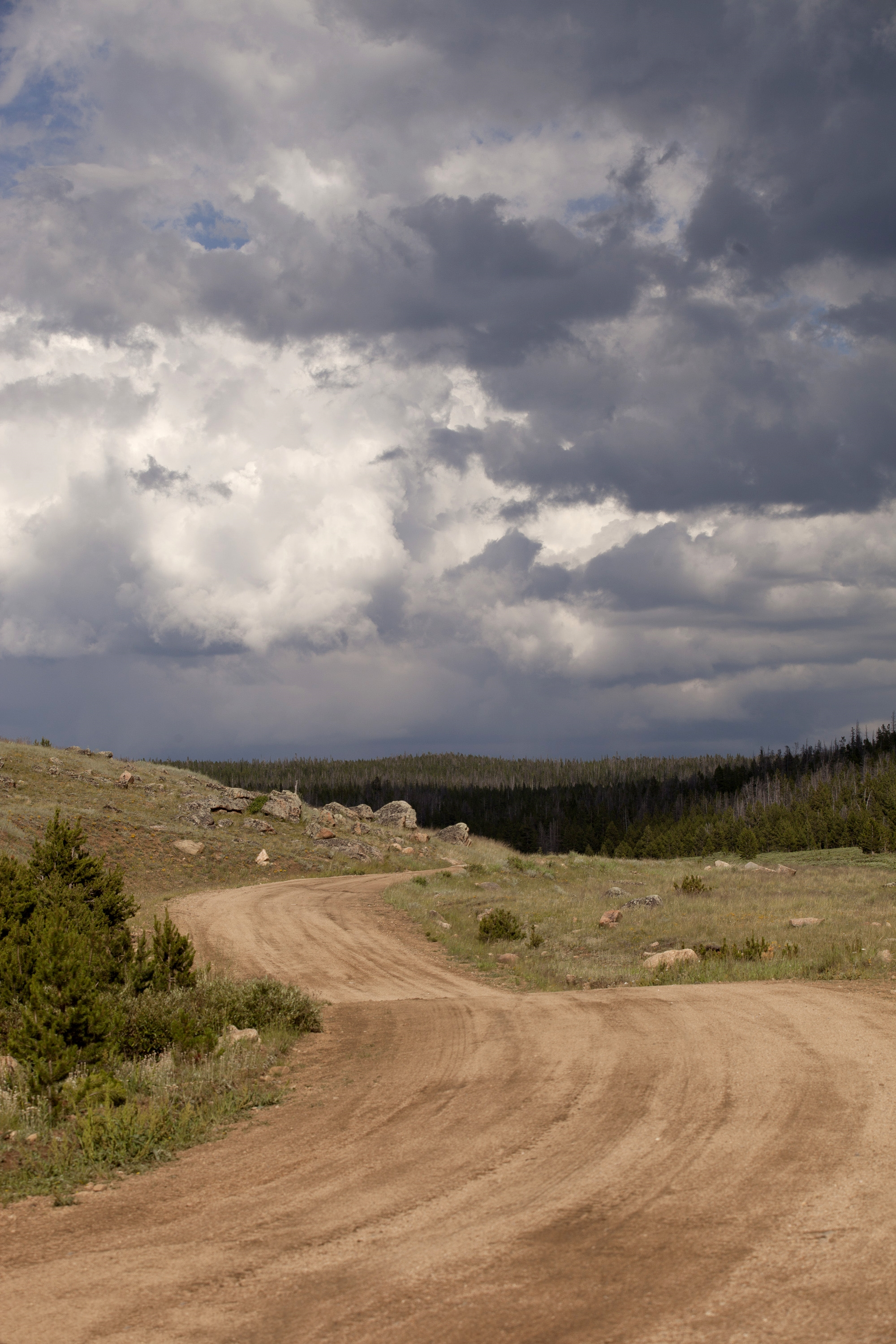 Open Road by Patricia McInroy