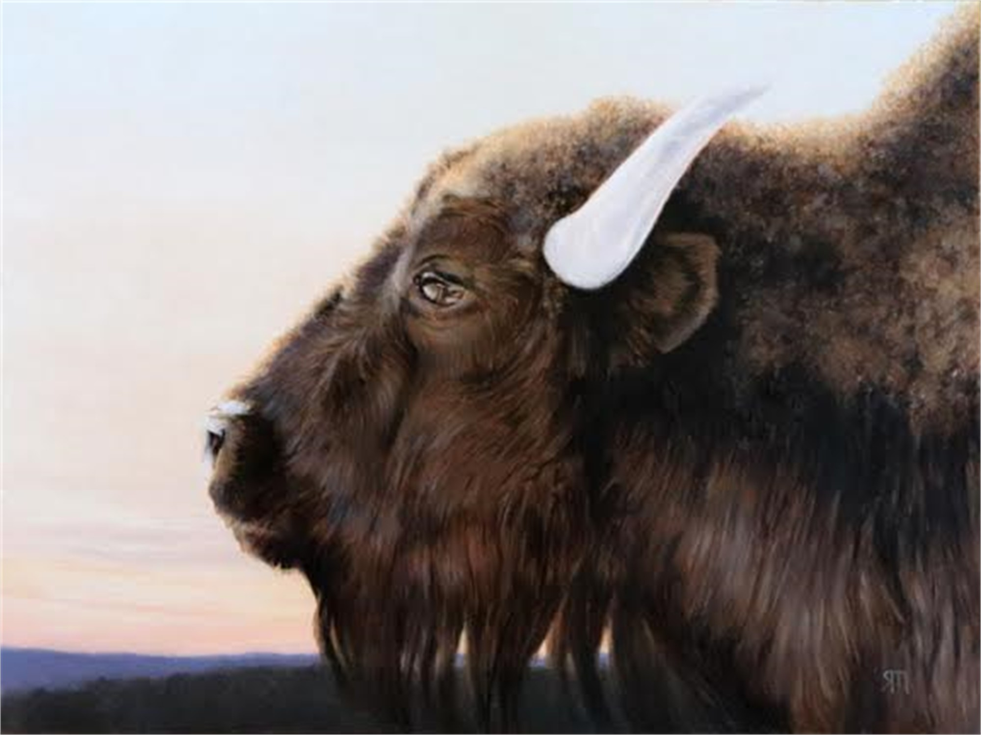Bison II by Richard Murdock