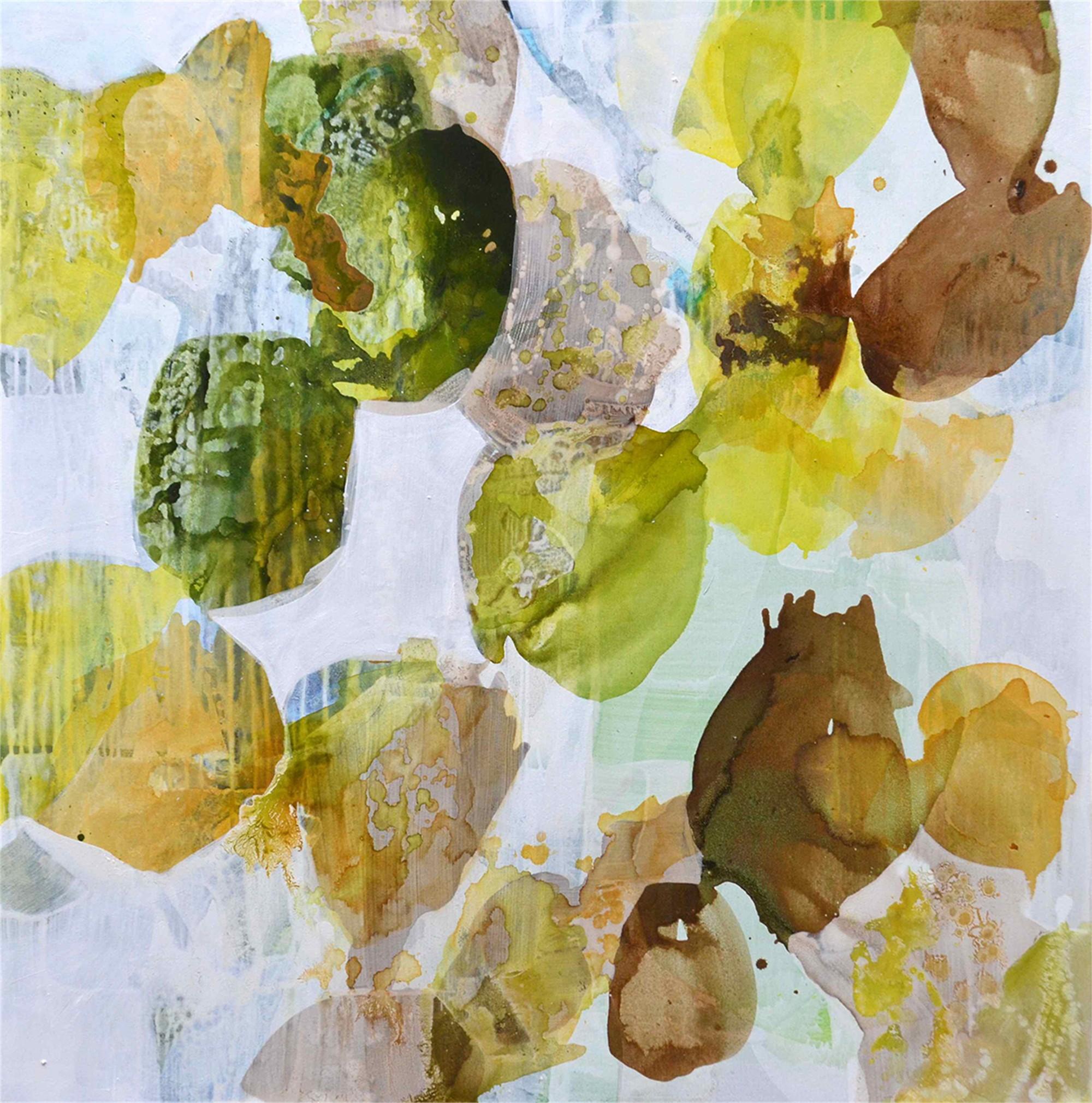 Seashells 12 by Liz Barber