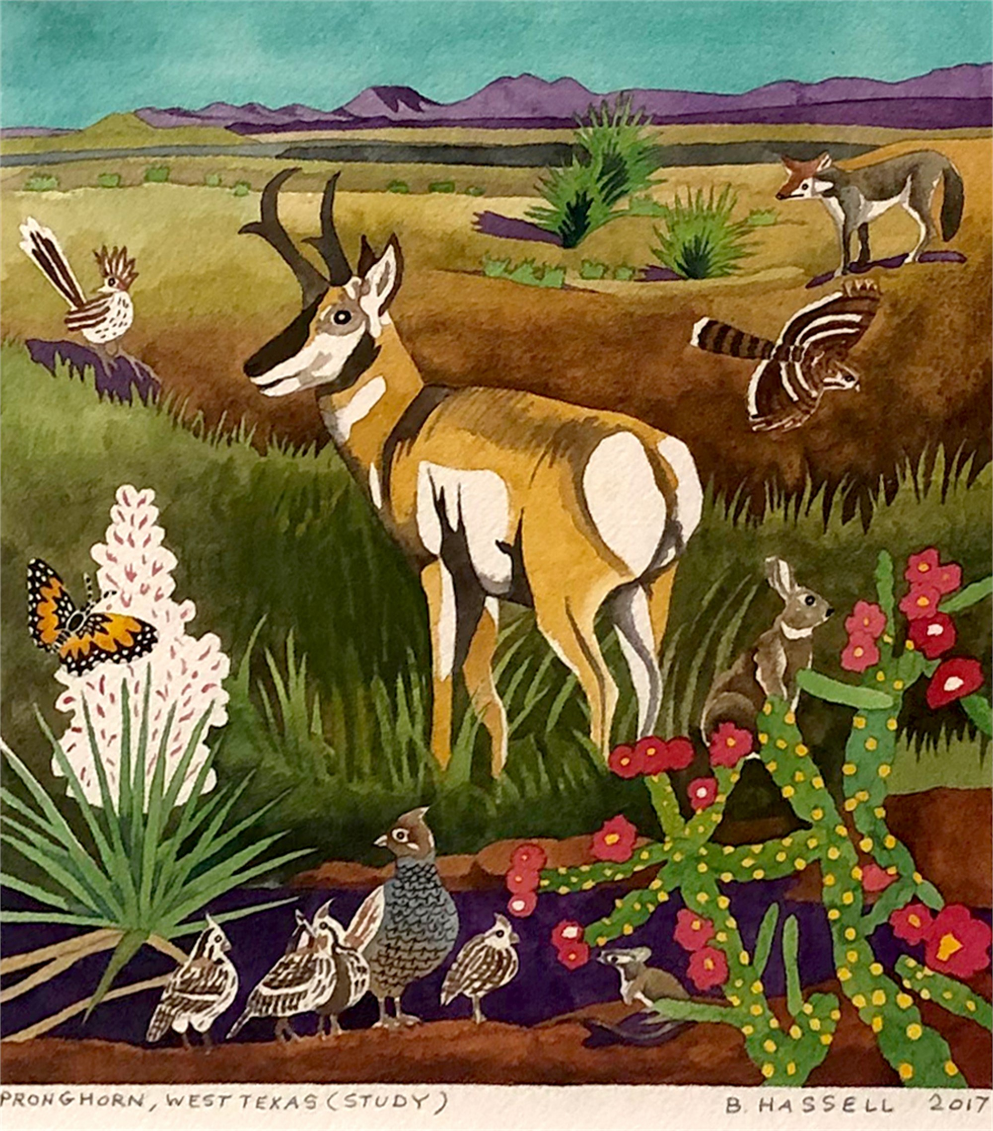 Pronghorn, West Texas (Study) by Billy Hassell