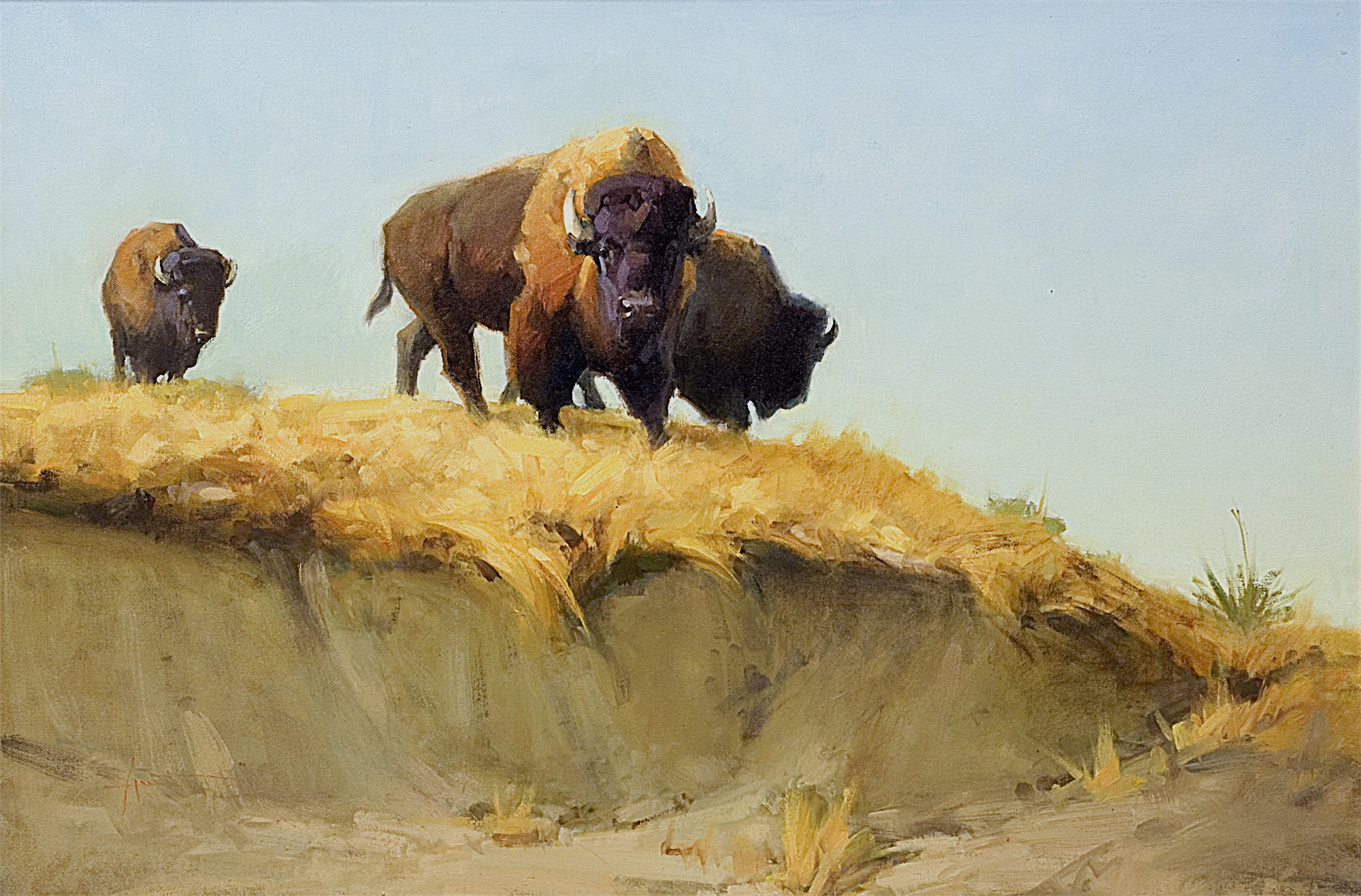 Buffalo Ridge by Lani Vlaanderen