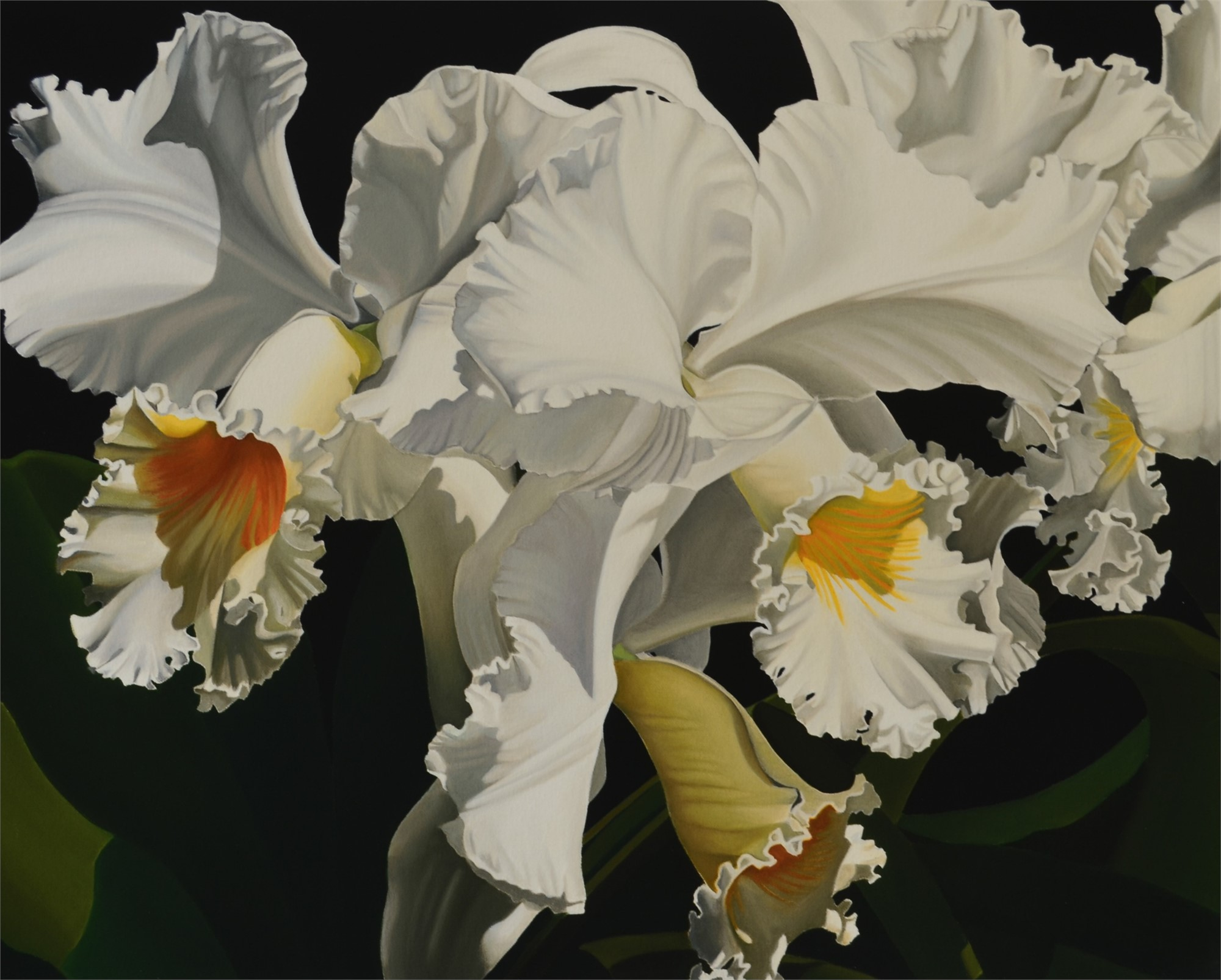 White Cattleya Orchids by Suzy Smith