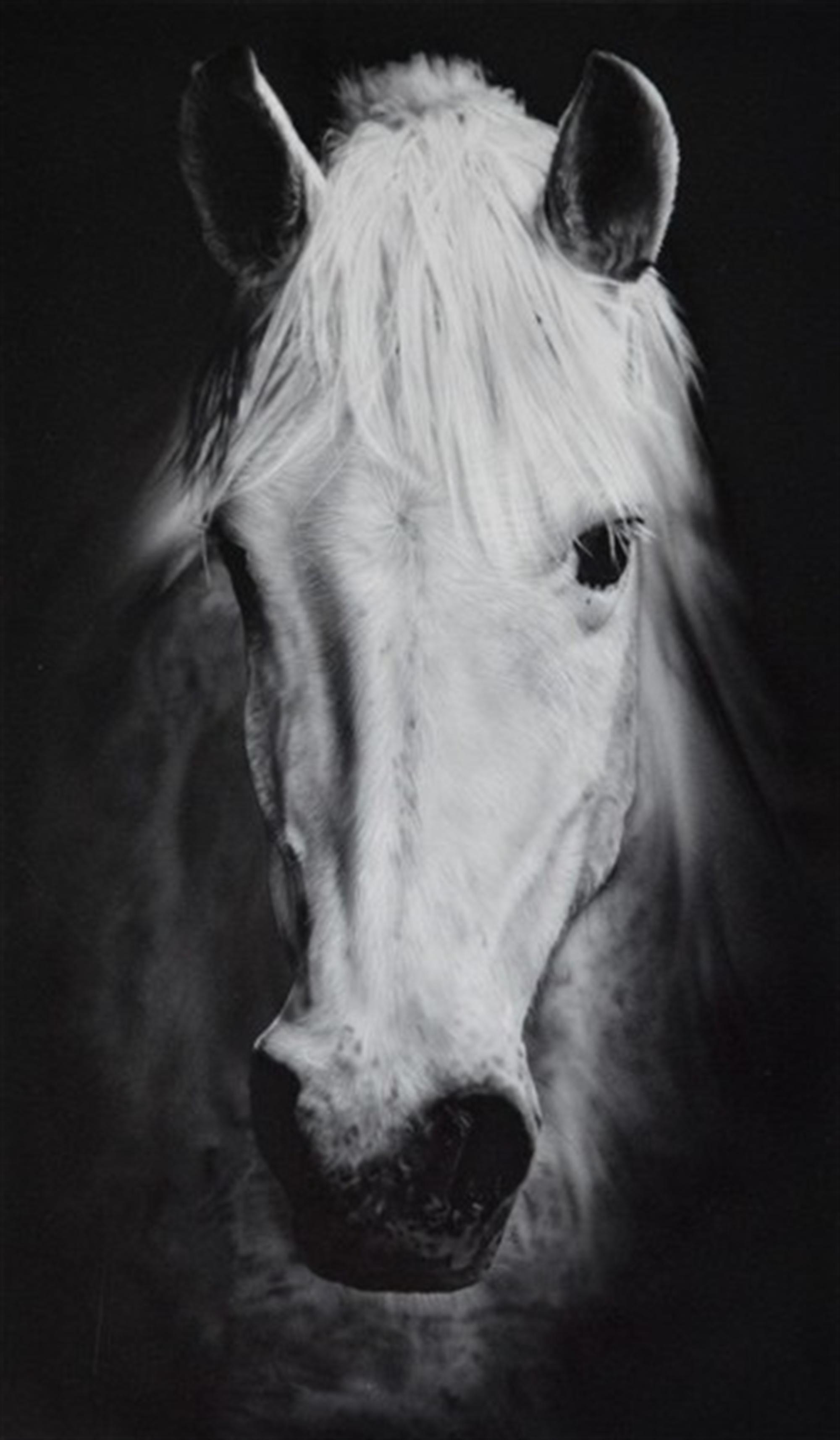 White Horse by Silvia Belviso