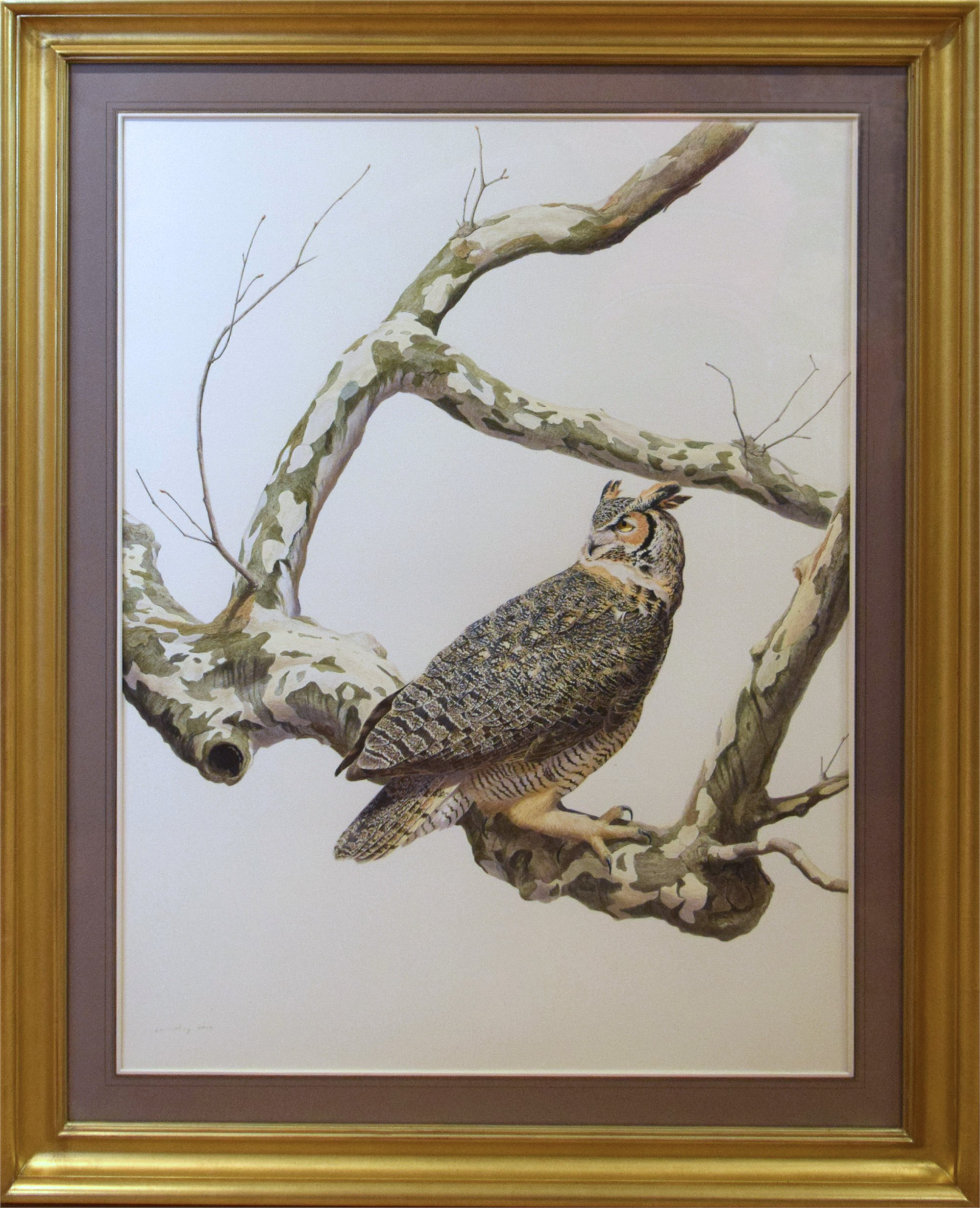 GREAT HORN OWL BY TONY HENNEBERG by Tony Hennenberg