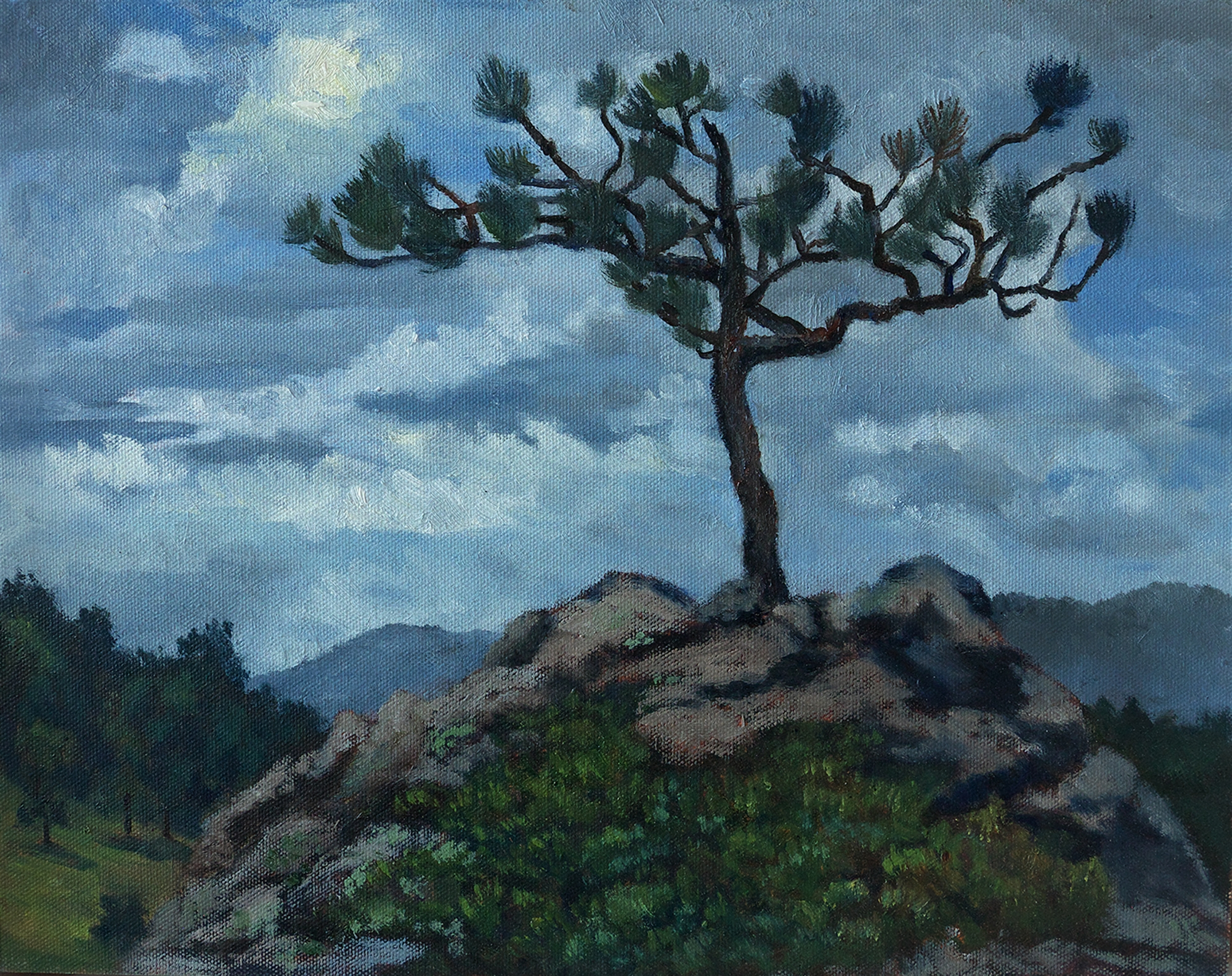Limber Pine by Kim Power