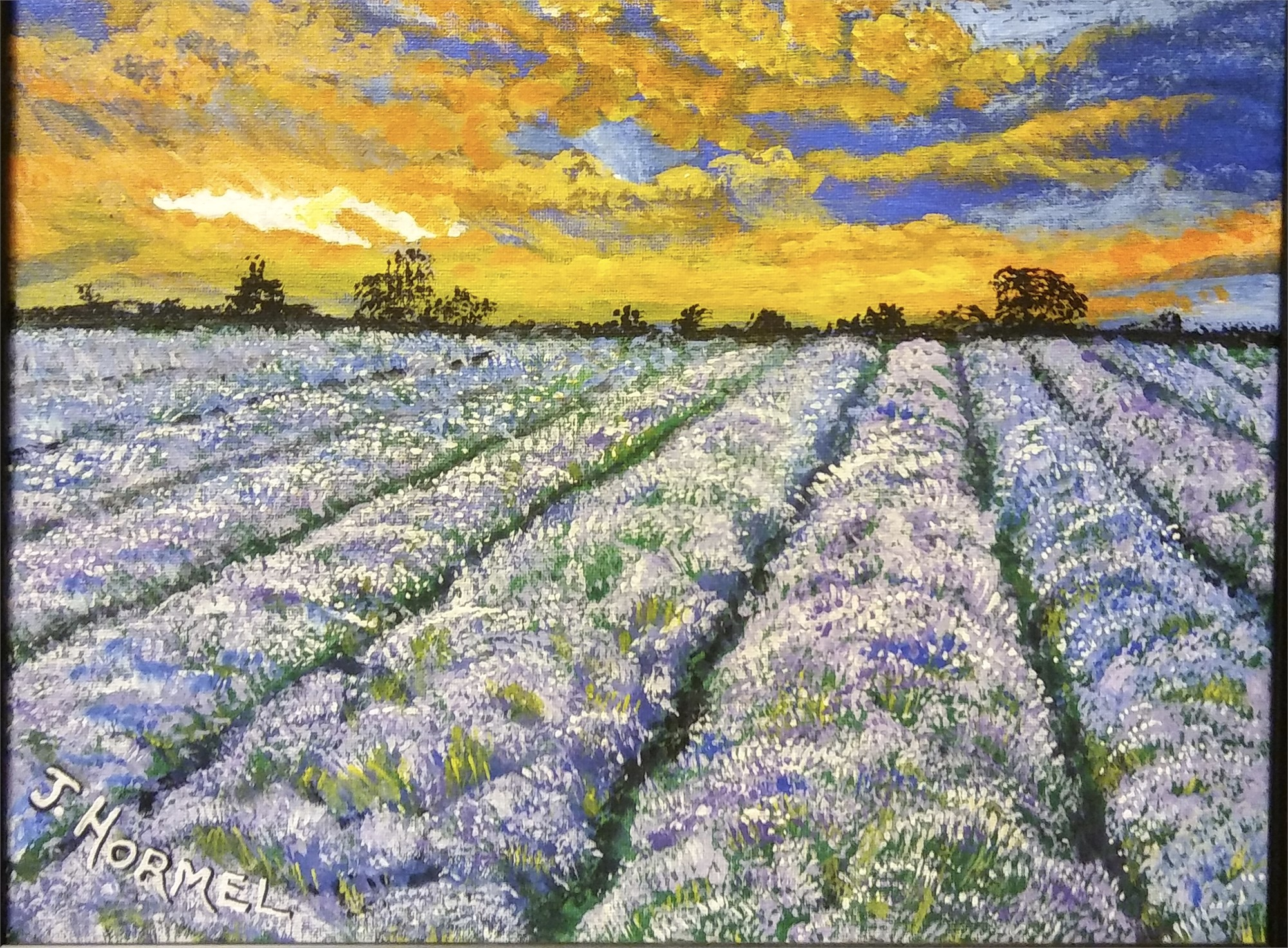 Lavender Fields by June Hormel (Newberg, OR)