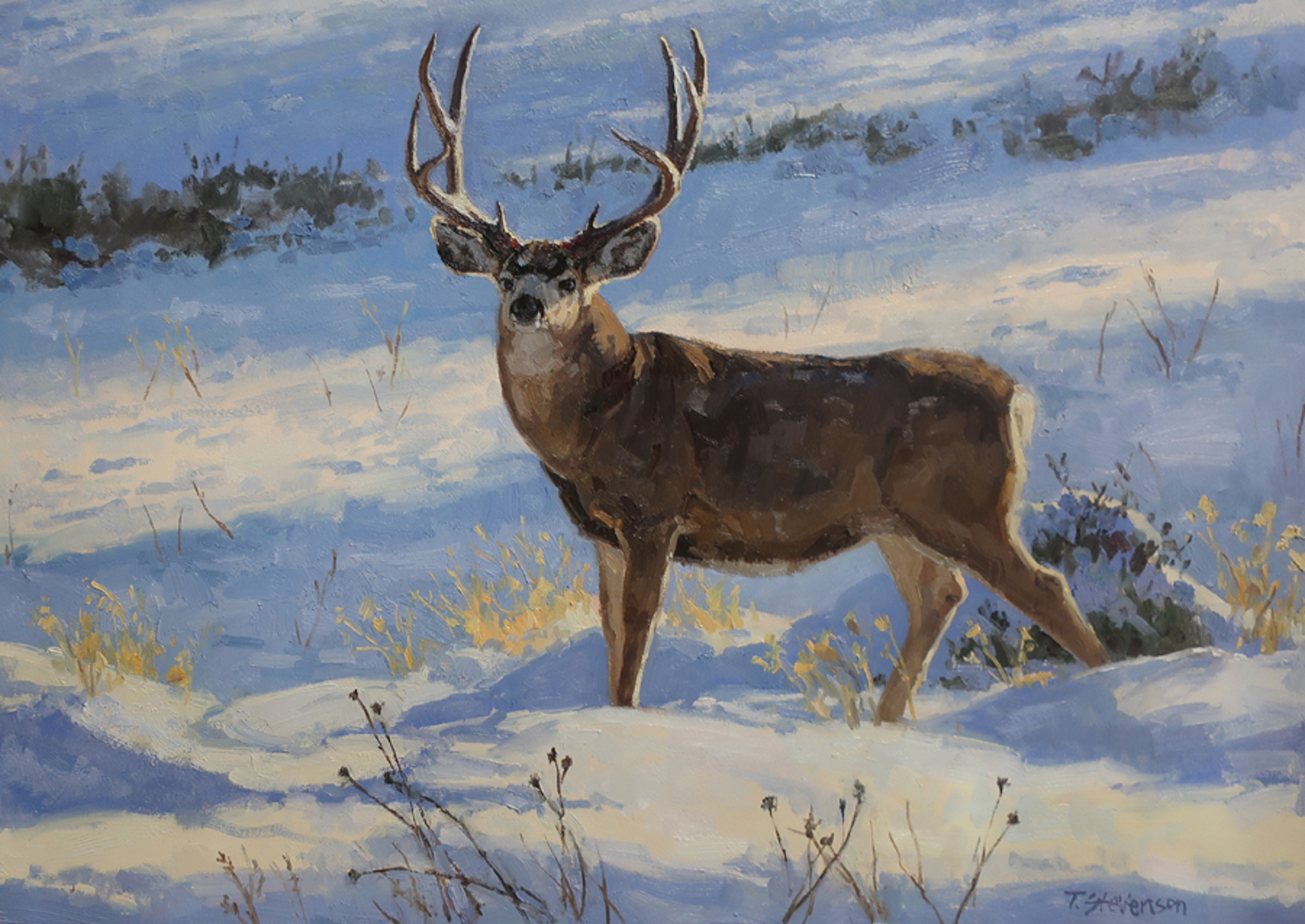 Winter Nobility by Tiffany Stevenson