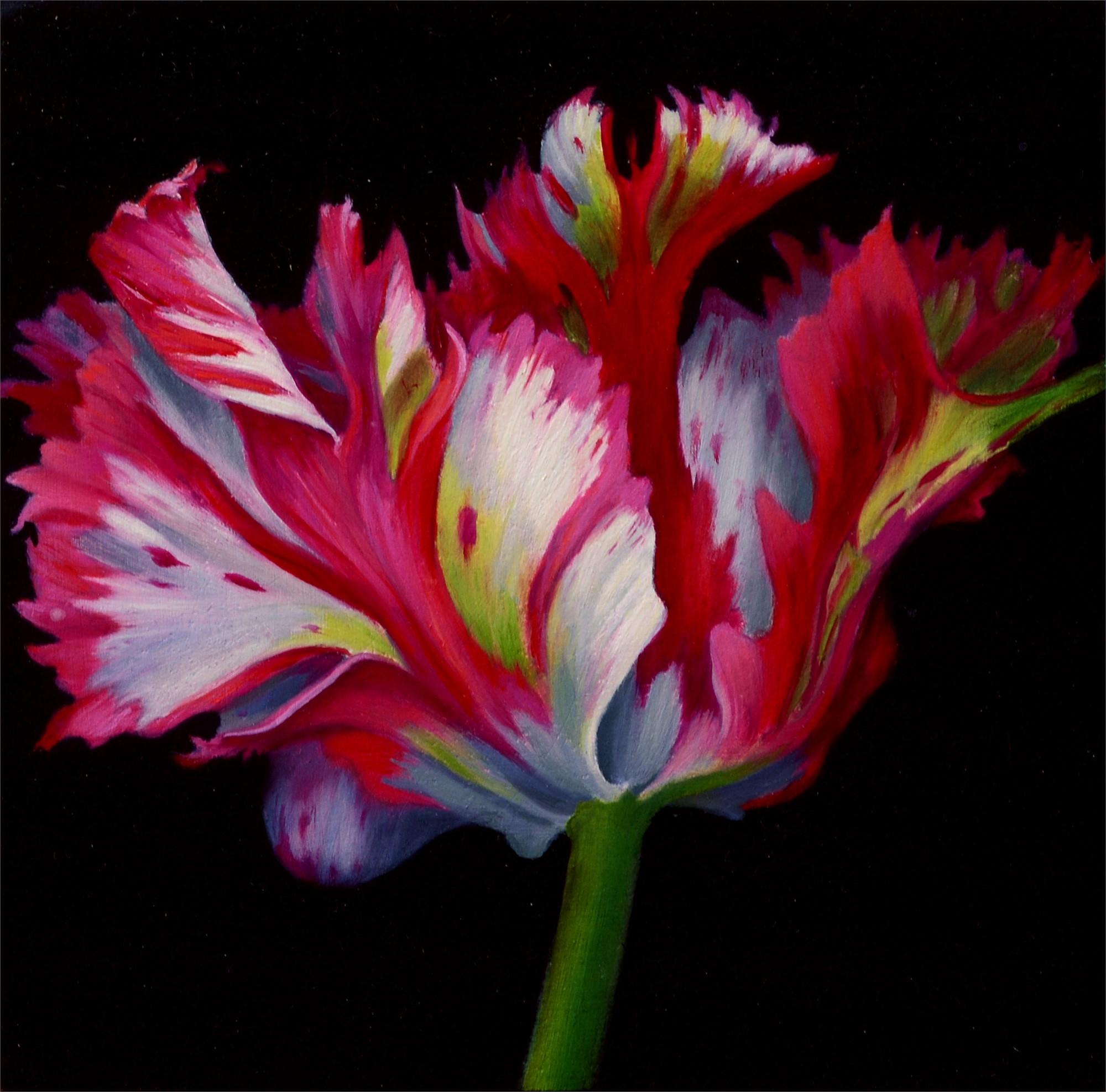 Pink Parrot Tulip by Sarah van der Helm