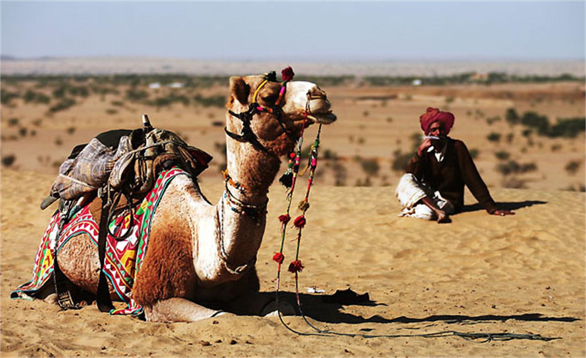 Thar Desert by Oksana Perkins