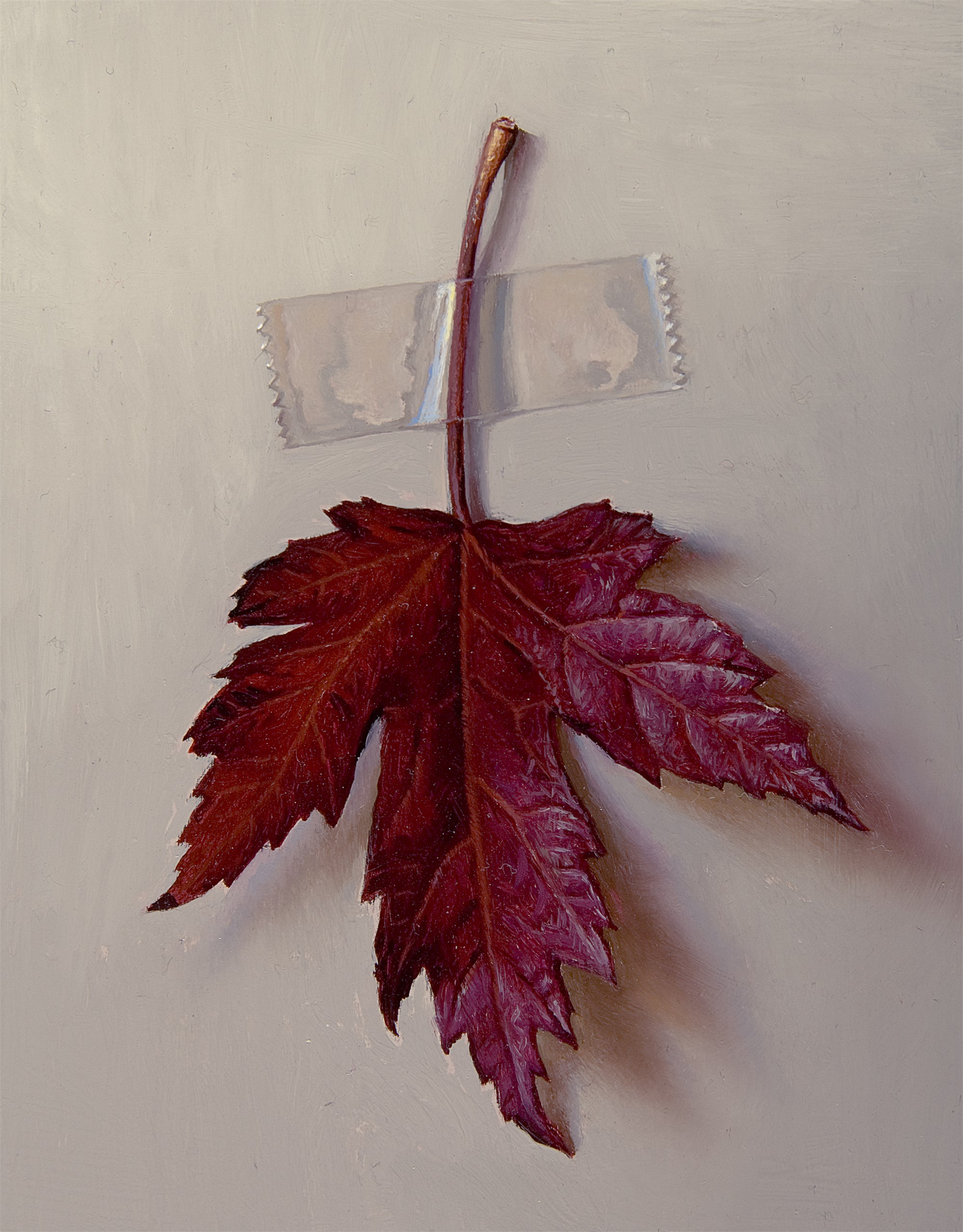 Red Maple Leaf by Scott Fraser