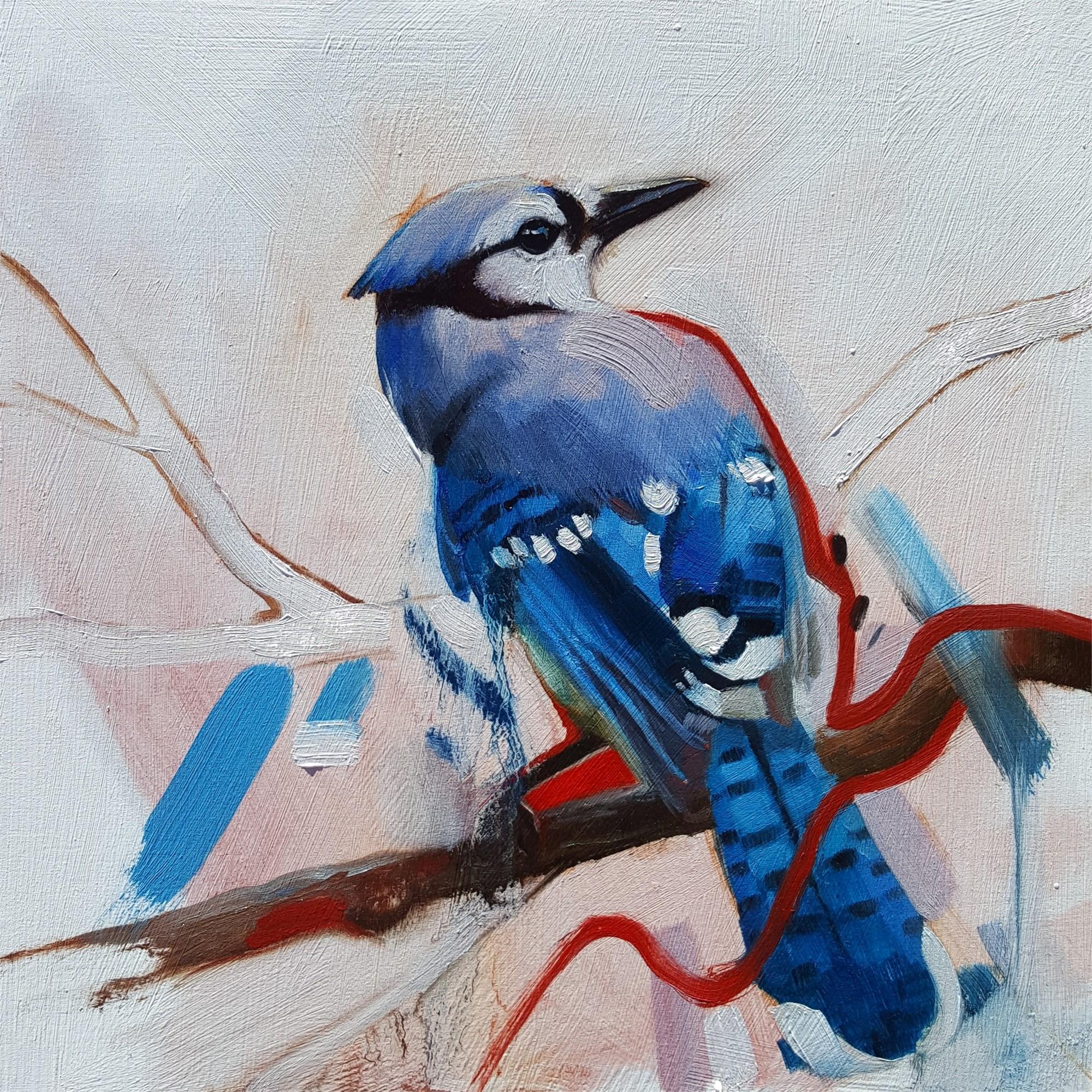 Blue Jay by Ryan Morse