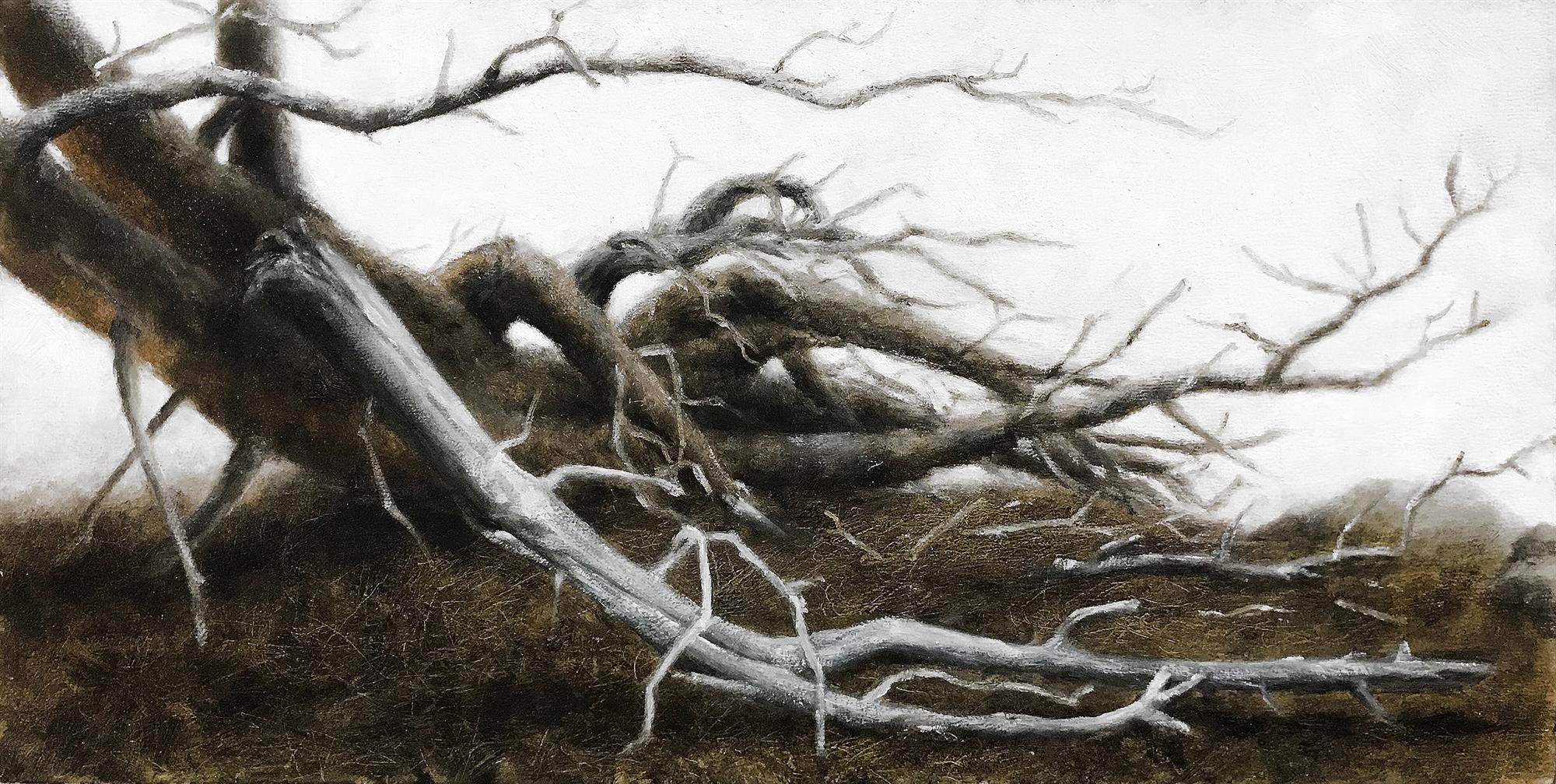 Ponderosa - Mountain Pine Beetle Outbreak by Lisa Lebofsky