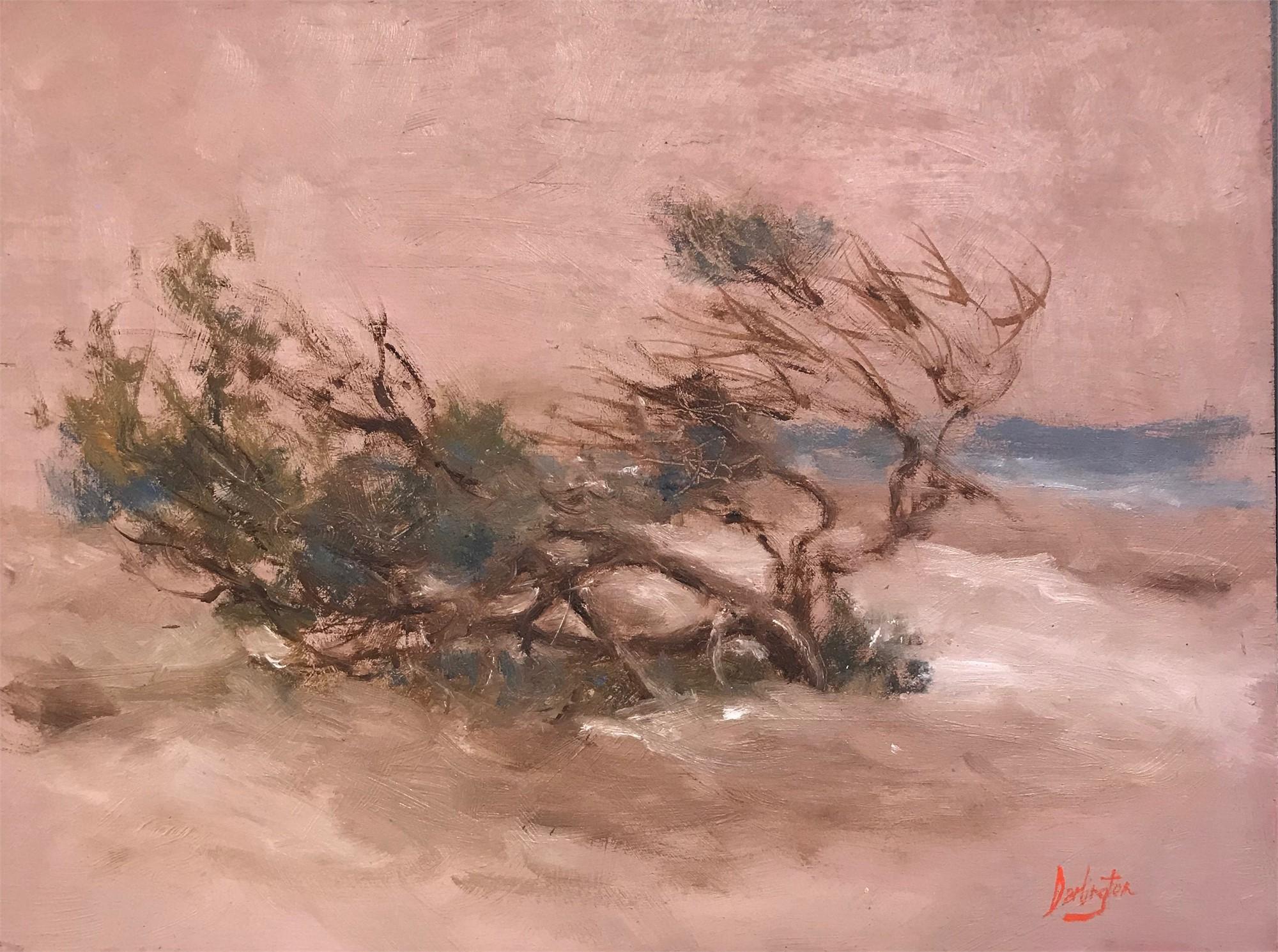 Study of Windblown Cedar by Jim Darlington