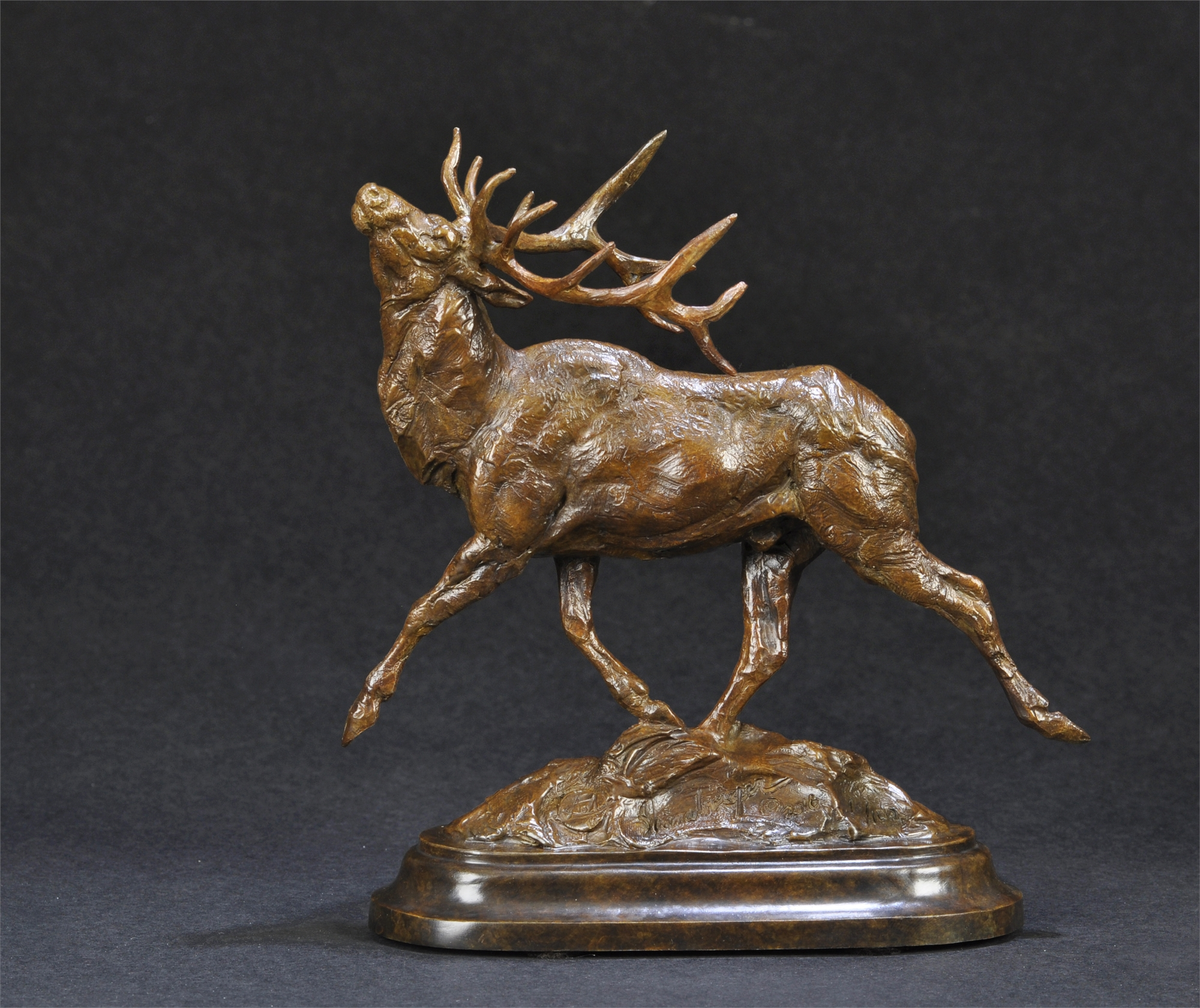 Wapiti (Elk) by Tim Shinabarger