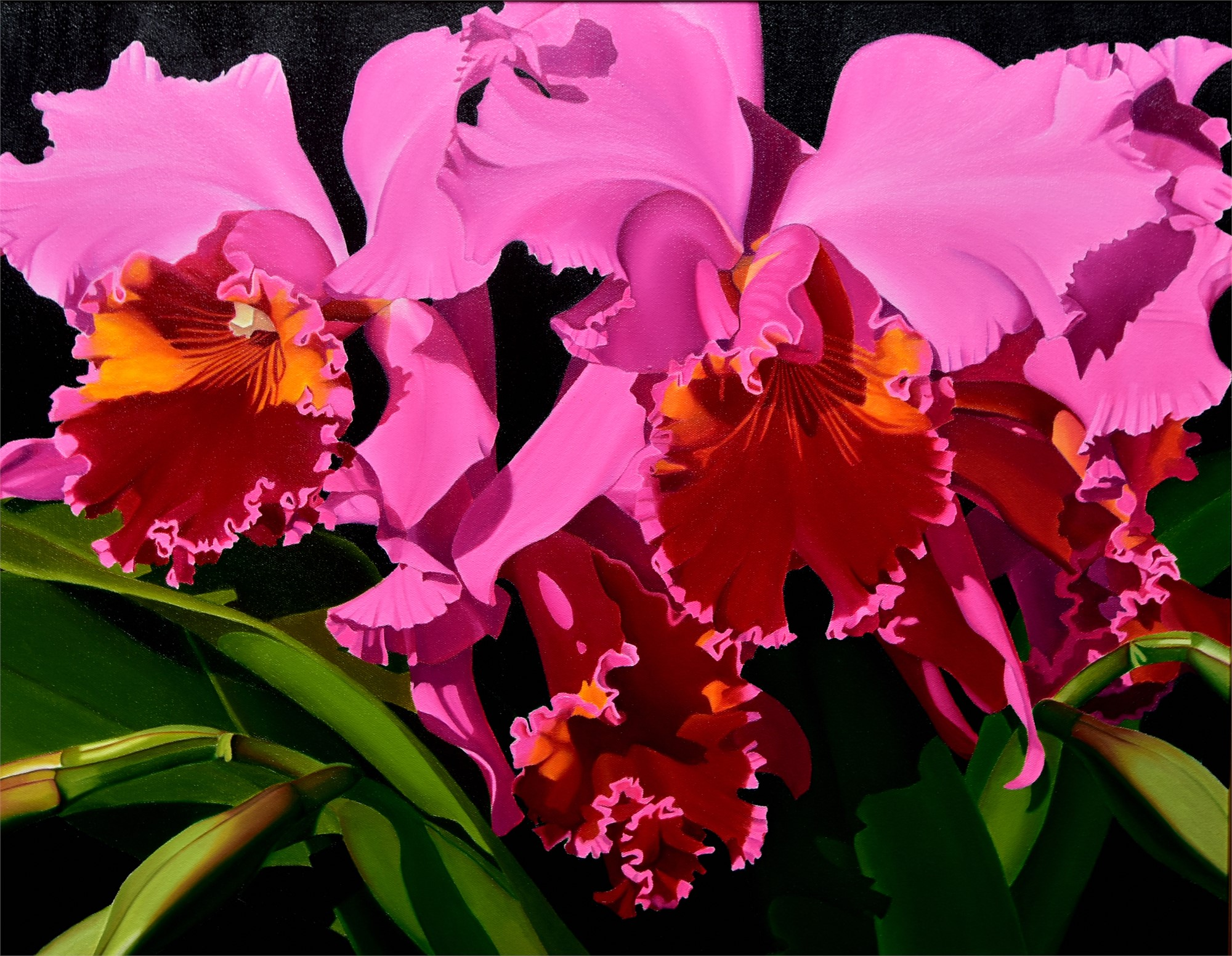 Pink Cattleya Orchids by Suzy Smith