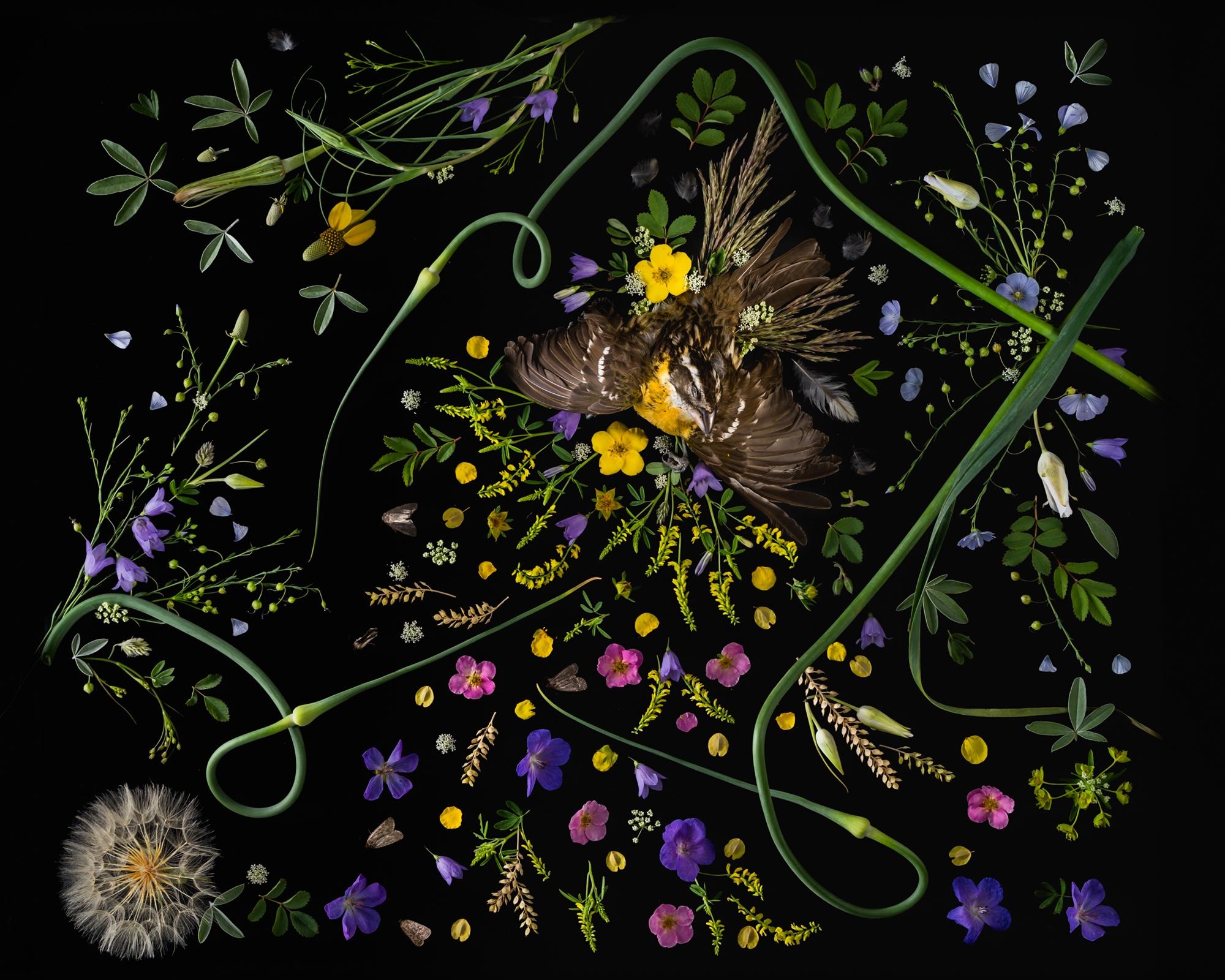 Grosbeak by Jenya Chernoff