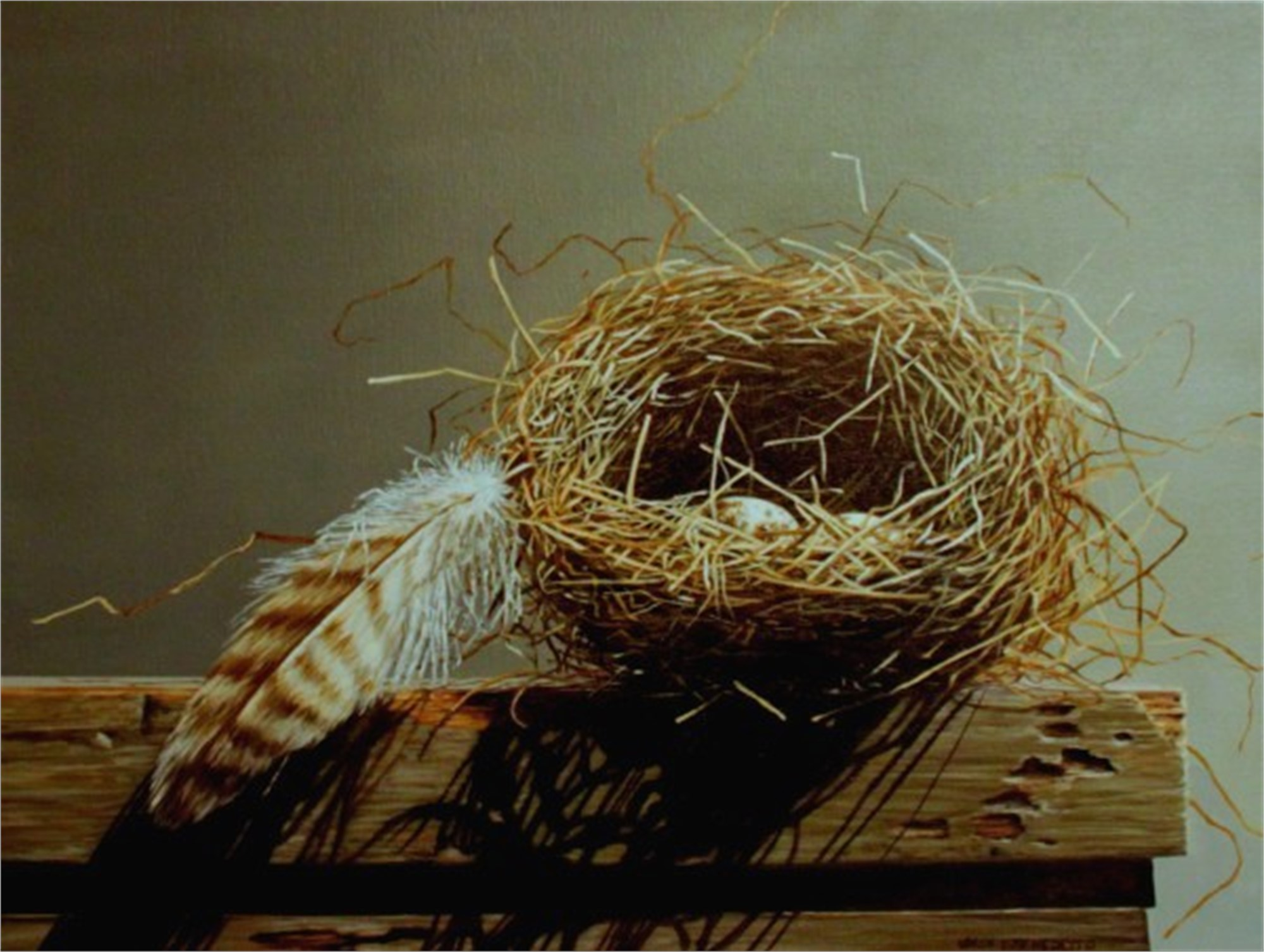 Nest and Feather by Loren DiBenedetto