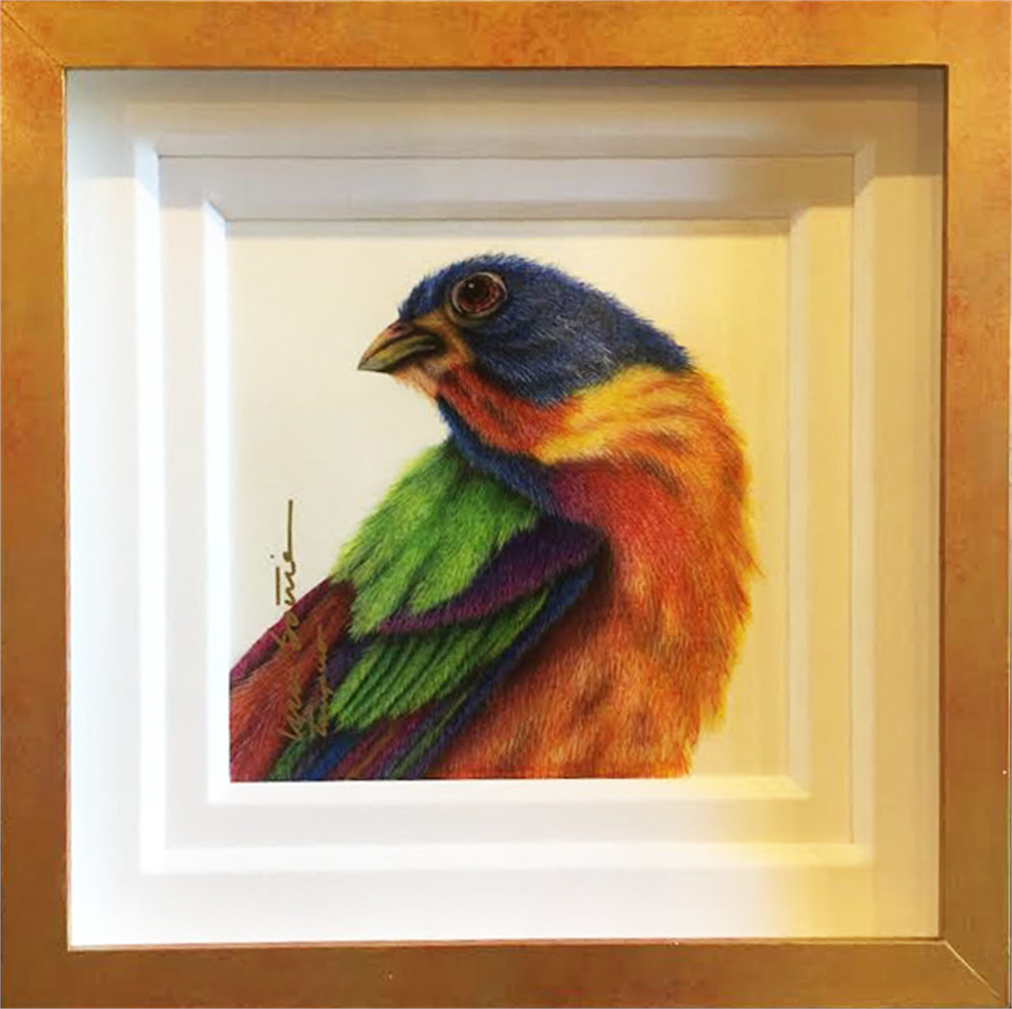 Painted Bunting, 11/23/16 by Luis Sottil